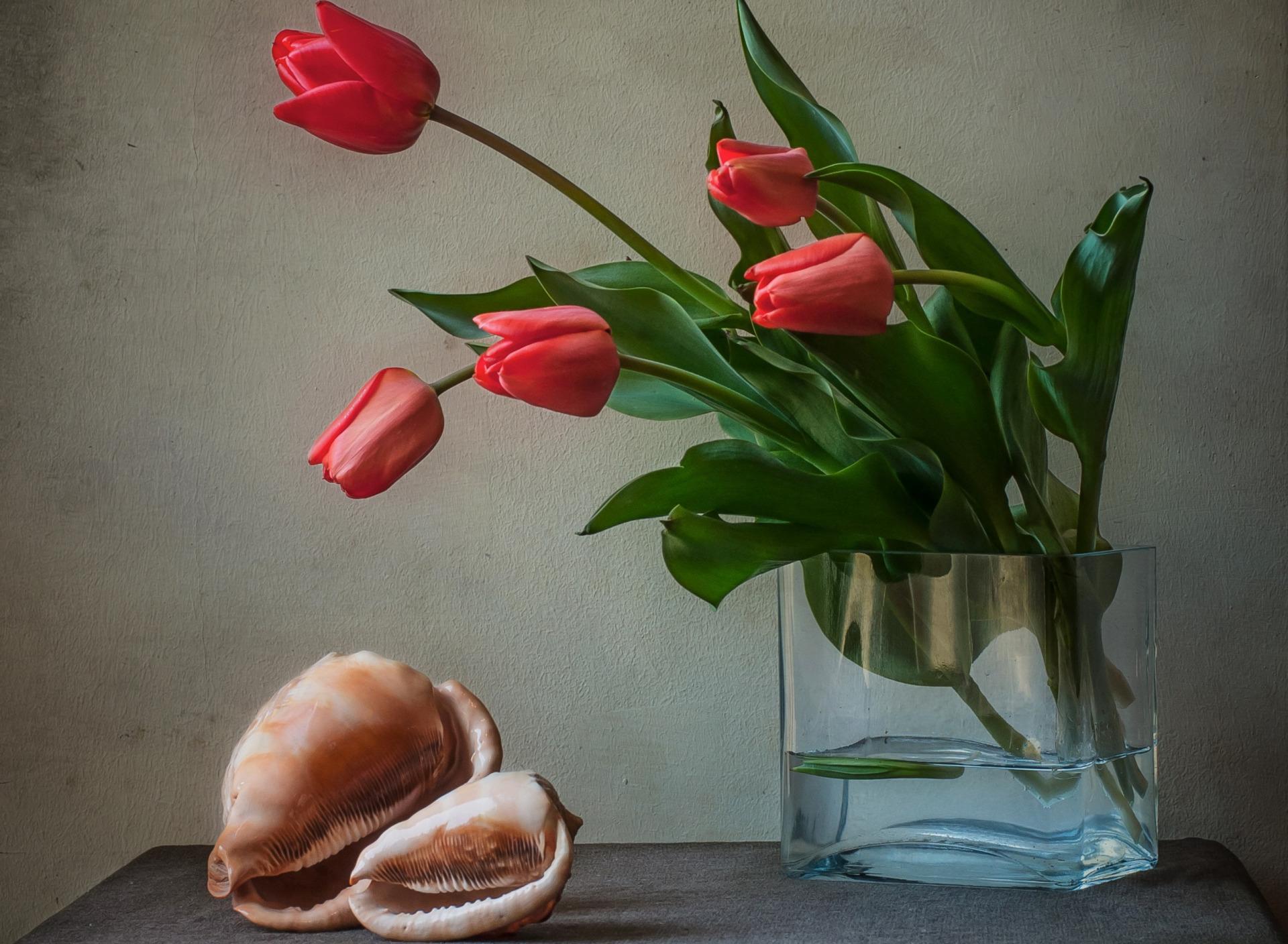 обои на рабочий стол красные тюльпаны в вазе свяжусь