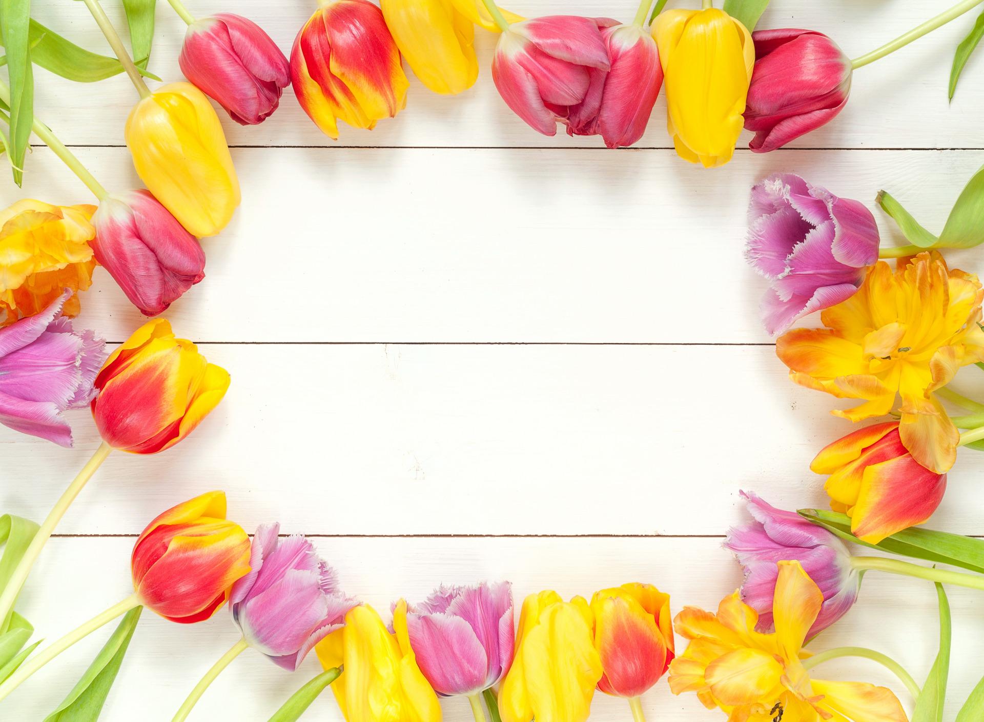 Фоторамка из цветов с тюльпанами