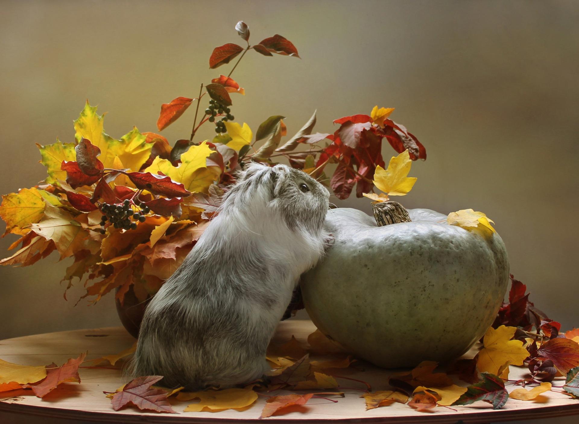 картинки про осень и животных тип видоискателя может