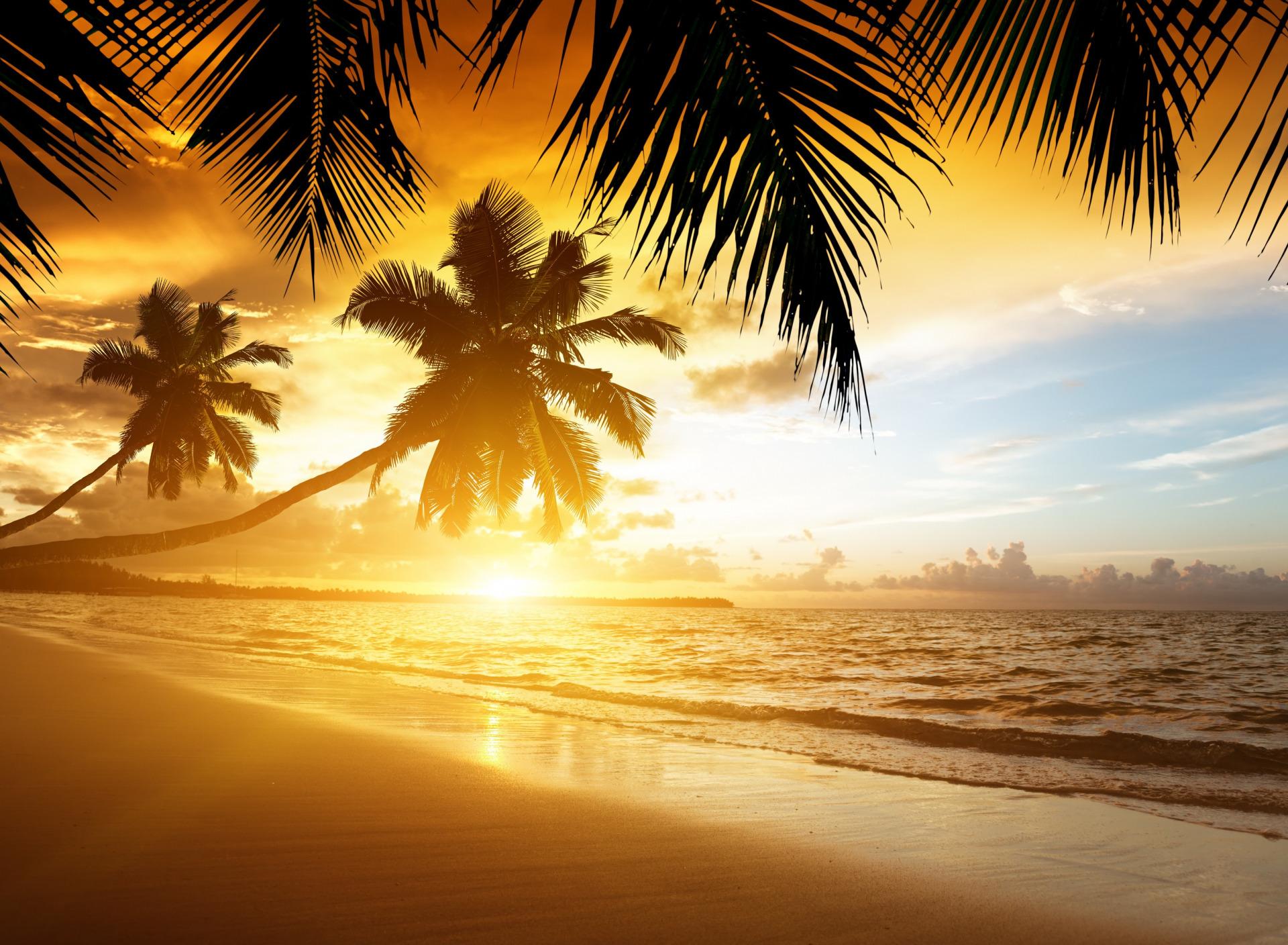 Отель пальма лазаревское фото подснежники весёлый