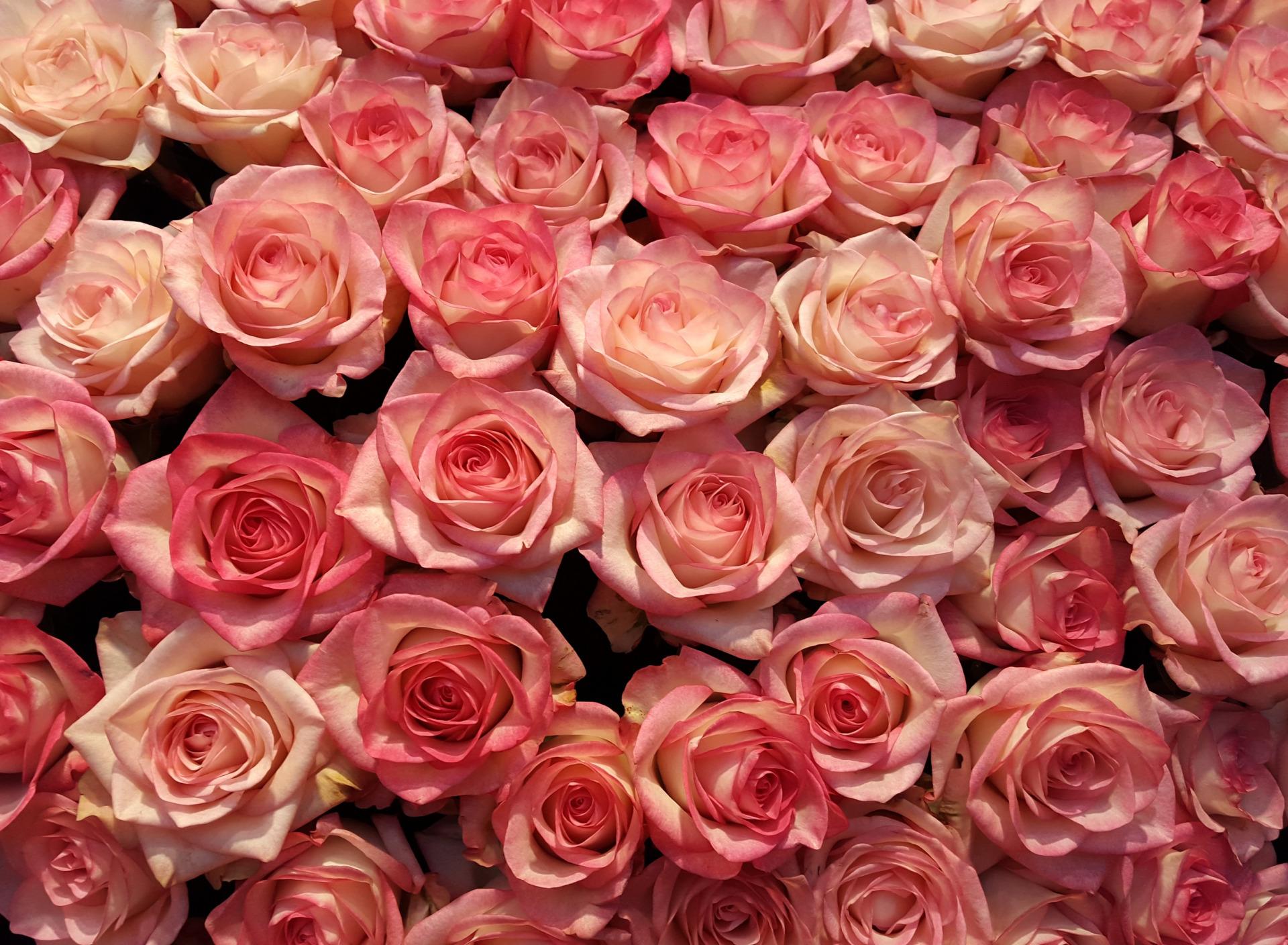 вид реакции картинки обои цветочки розы девушки получили этот