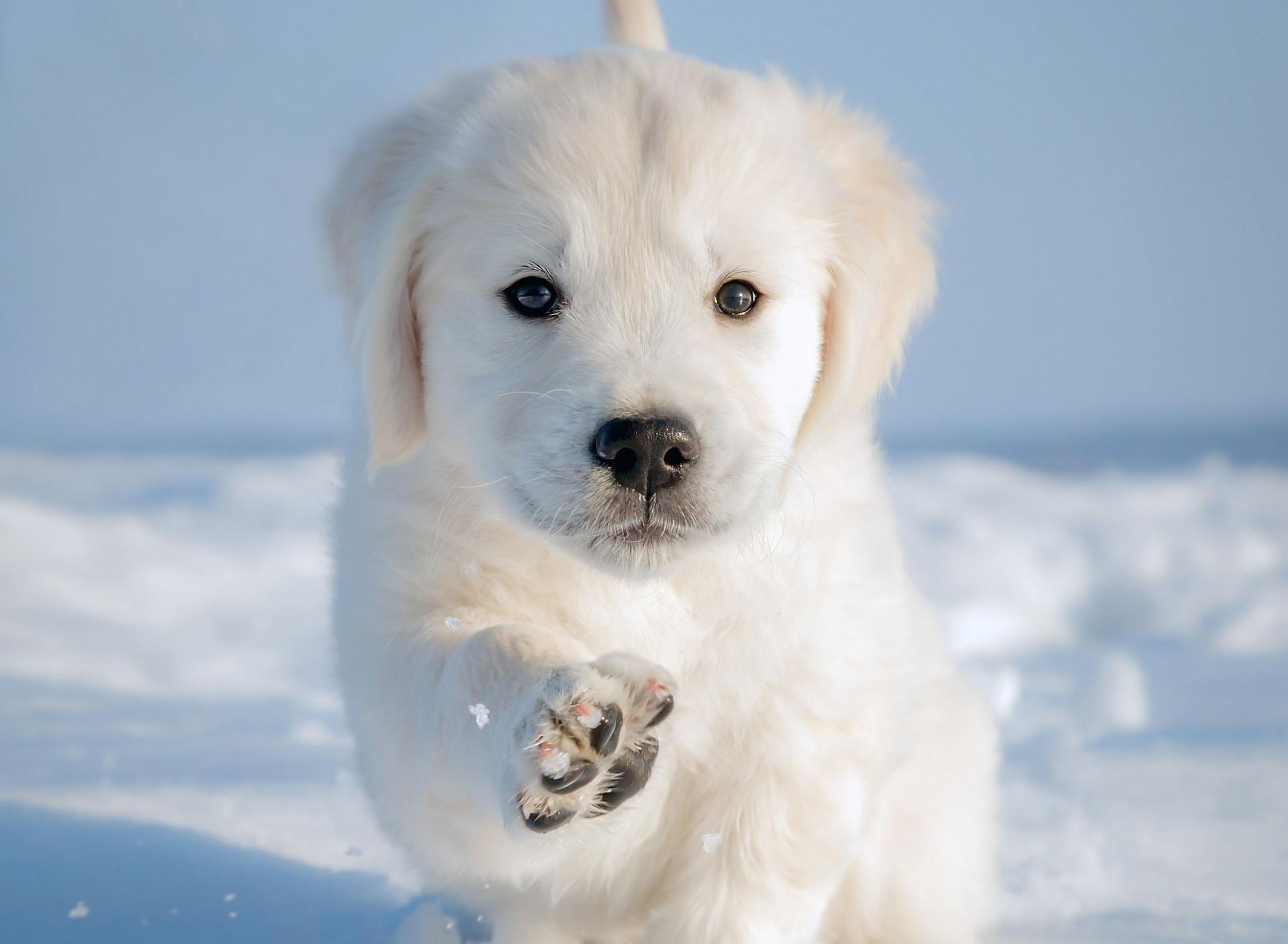 щенок снег puppy snow  № 2001750 загрузить