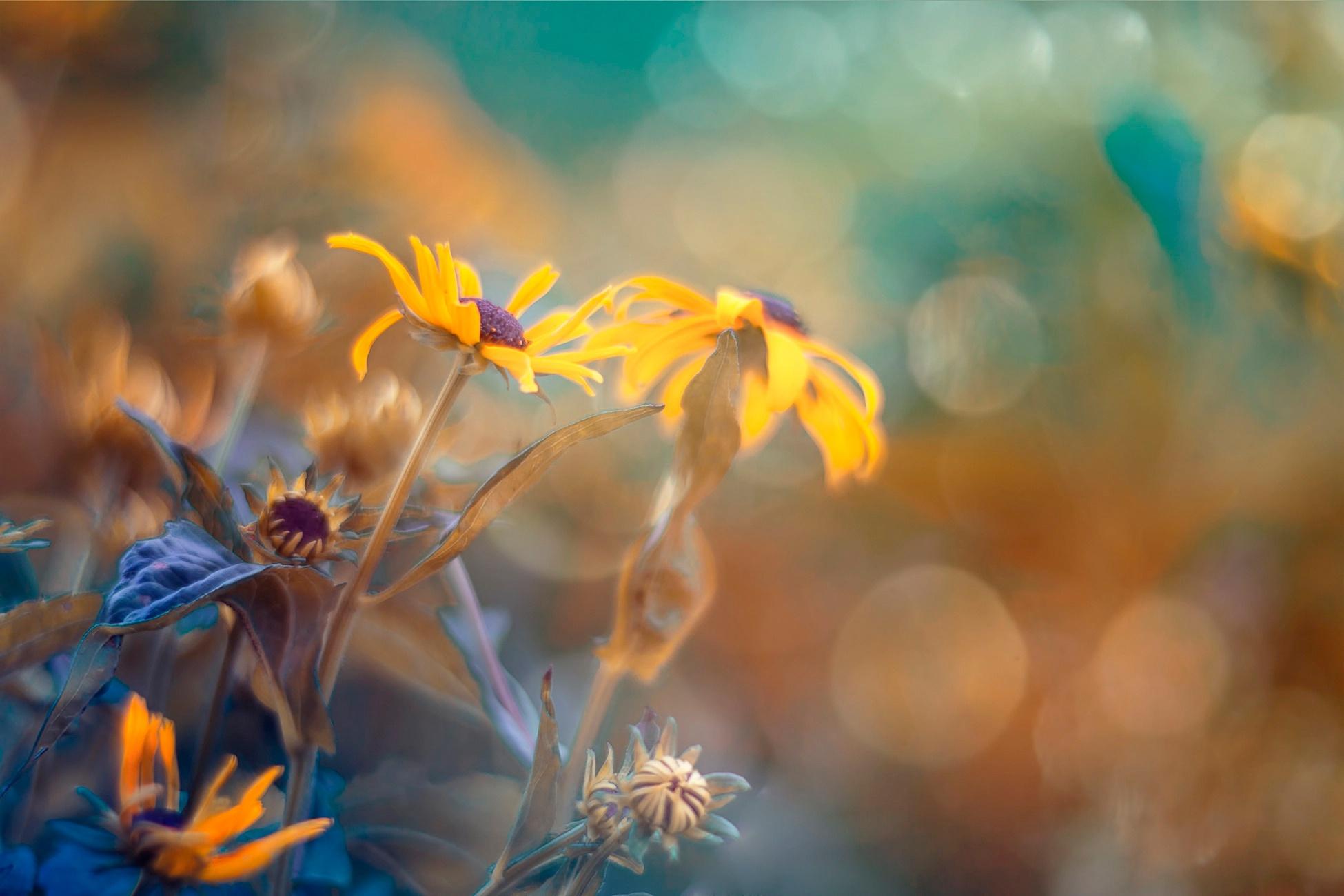 цветы солнце блики  № 1247188 без смс