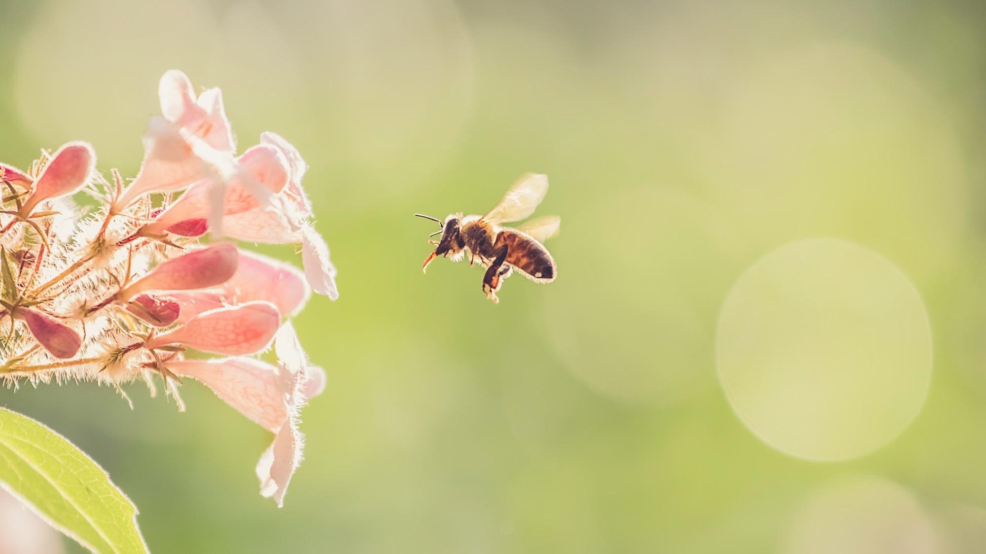 природа цветы насекомое пчела  № 3105913 без смс