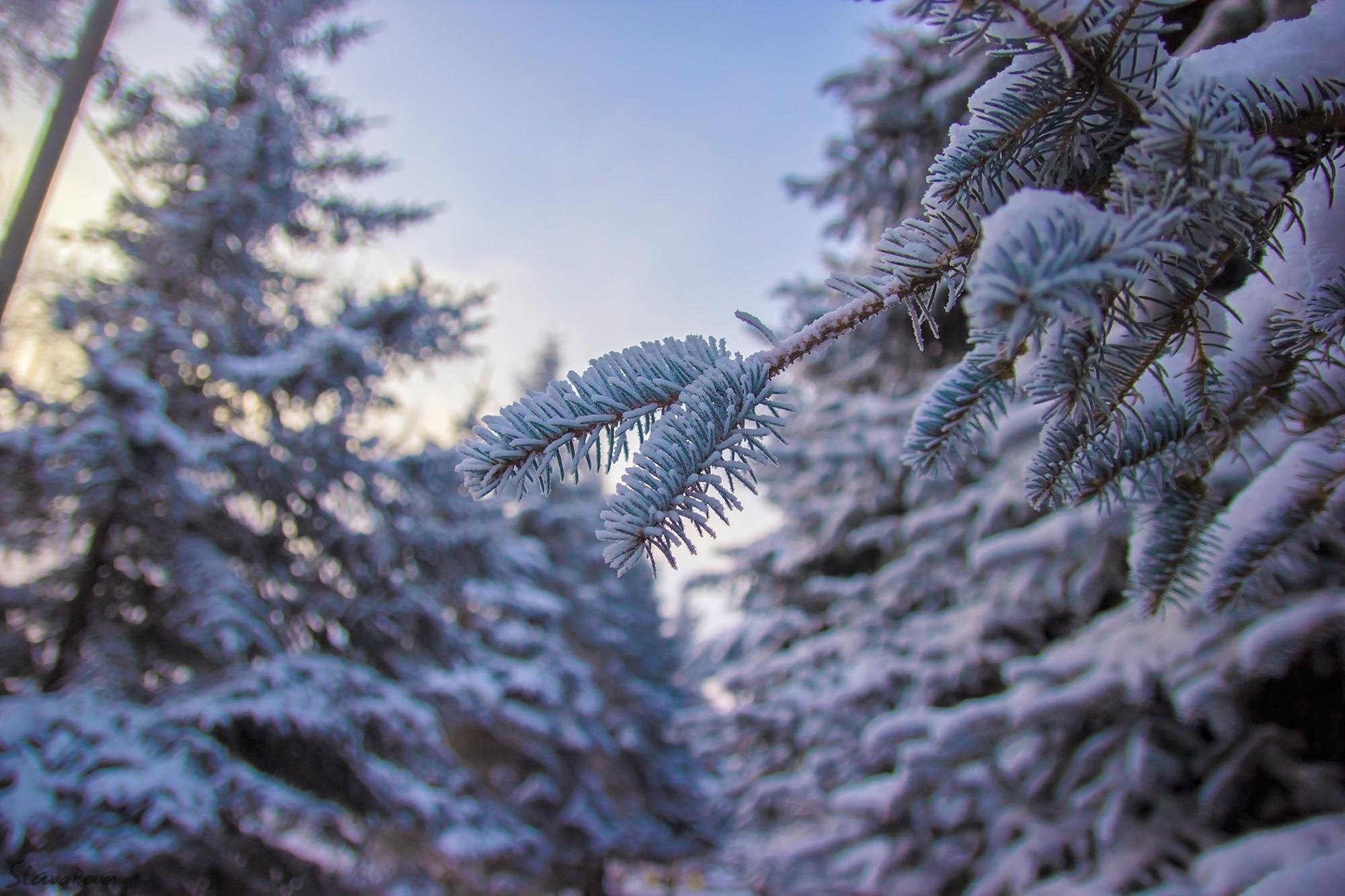 Парк зима ели  № 2388816 бесплатно