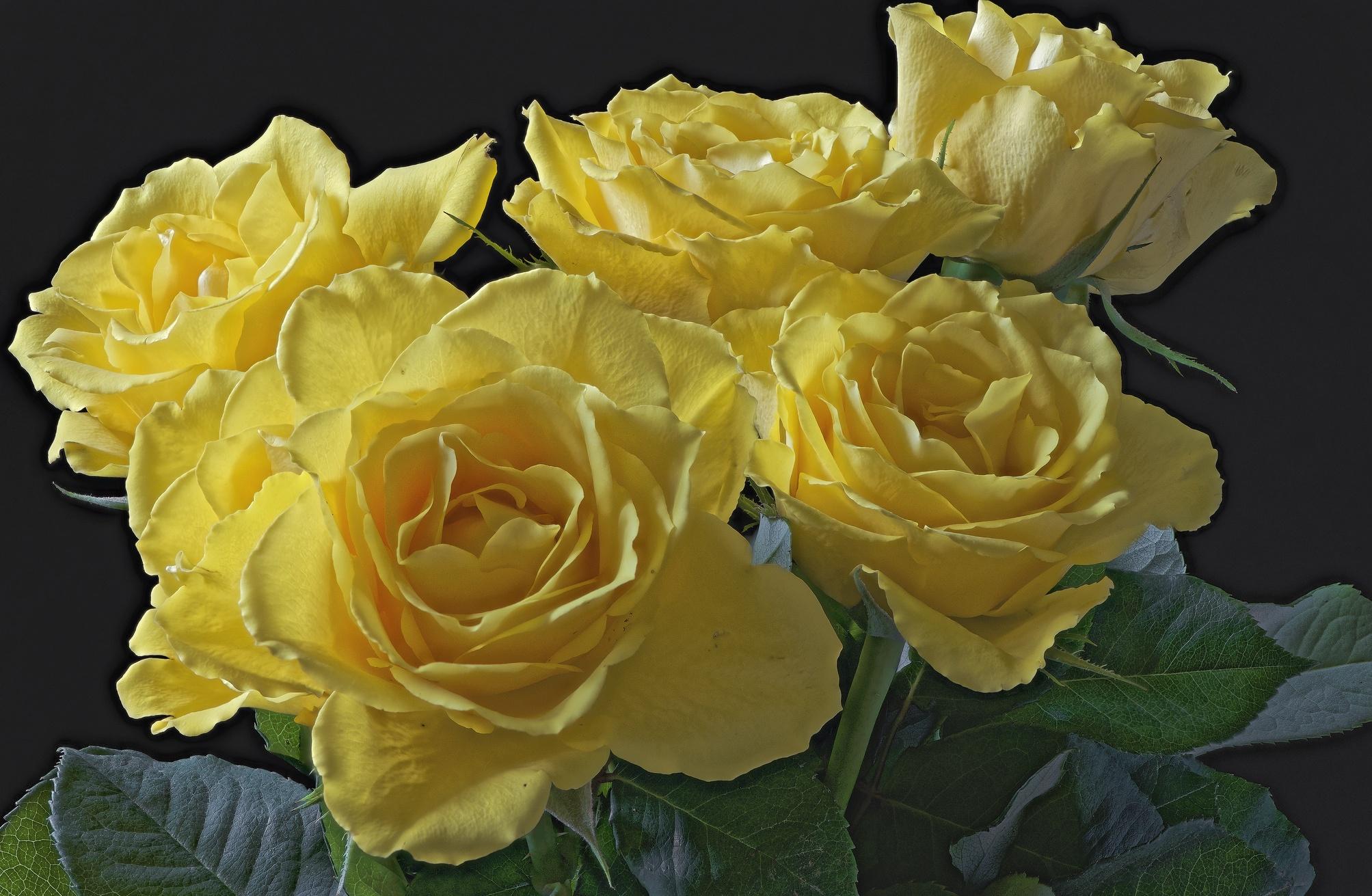 сегодня обои желтые розы сомневаться, что