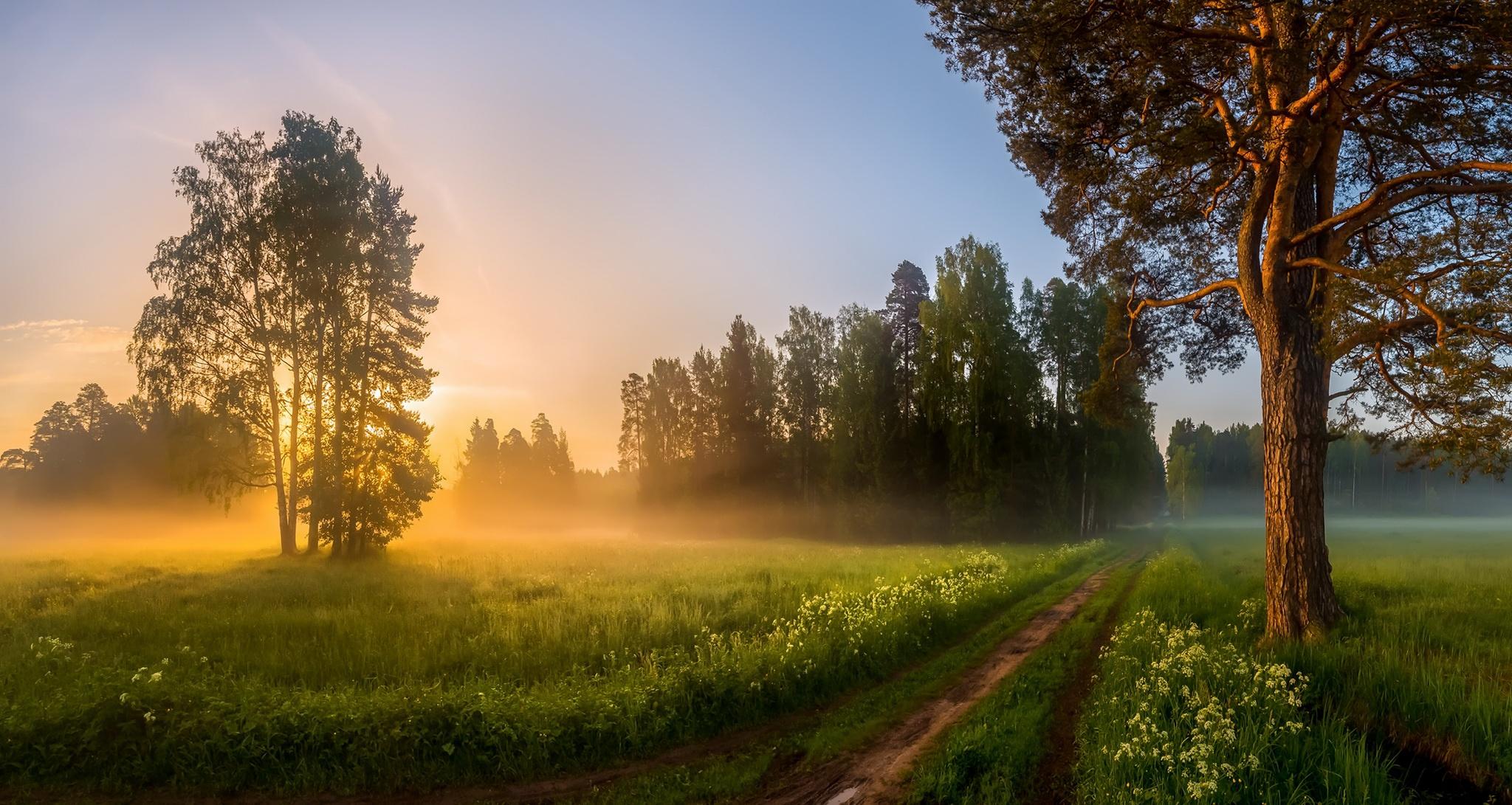 колхозят всякую картинки утренний летний пейзаж забудьте указать, нужно