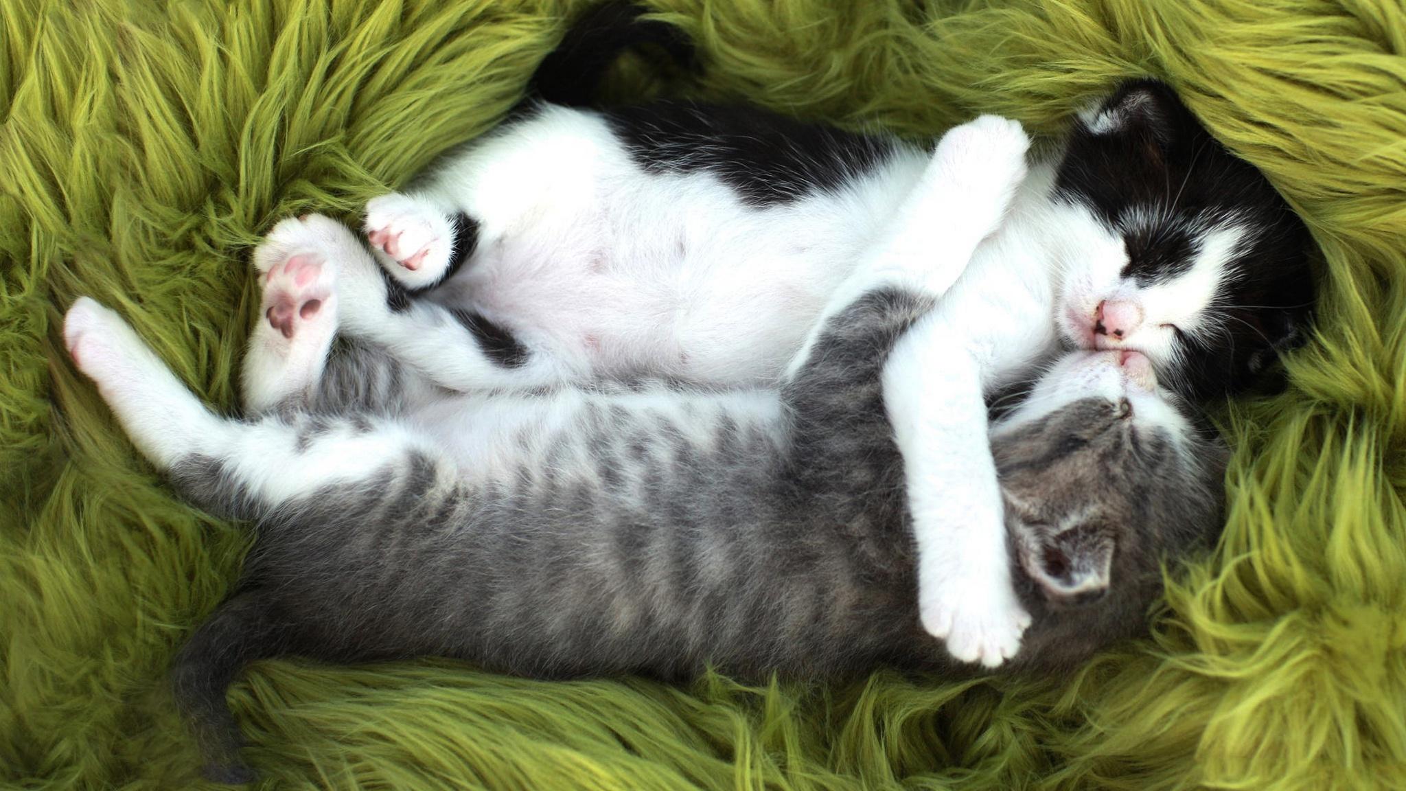 Кот с кошкой в обнимку картинки, открытки днем