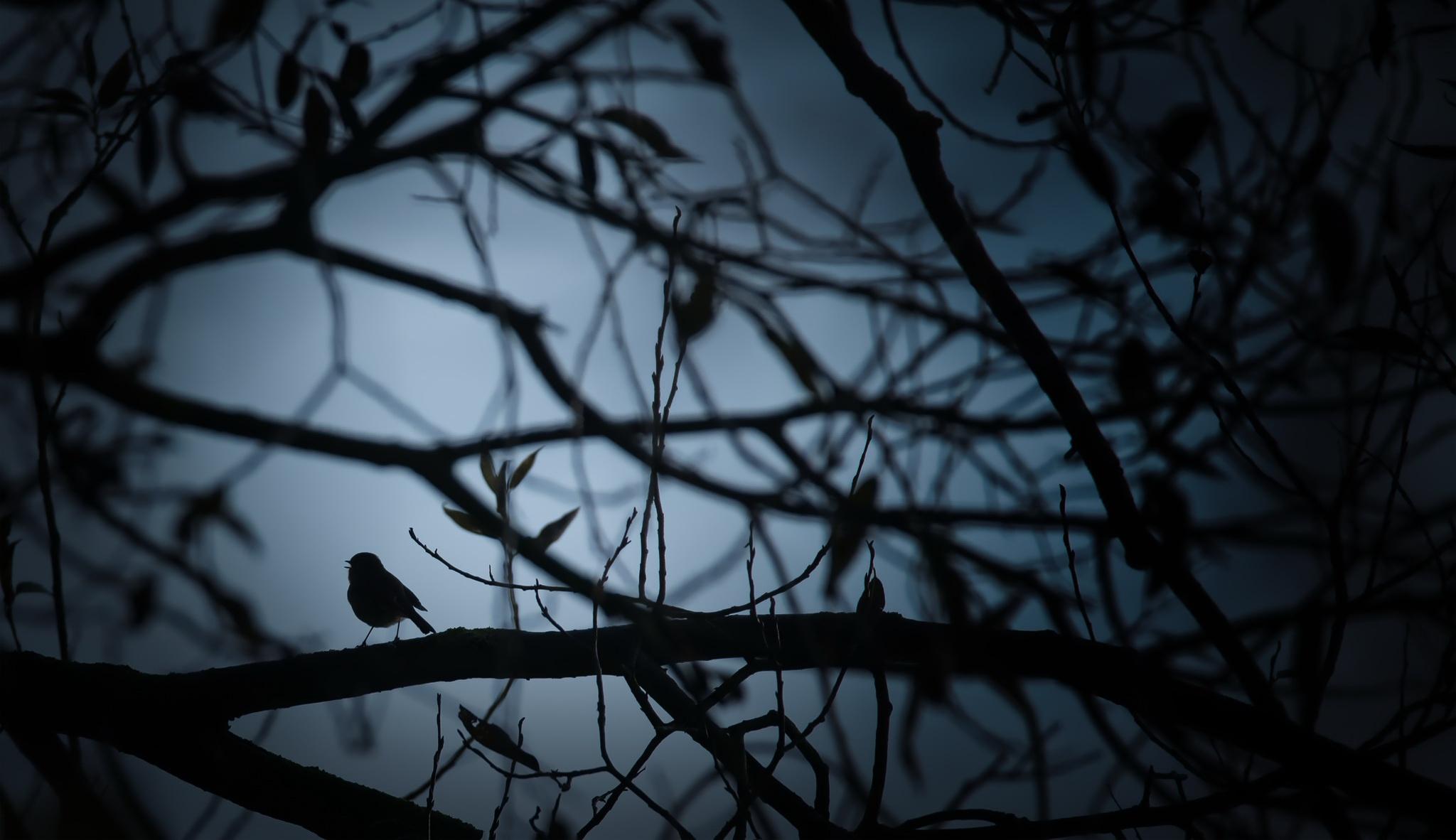 Картинки соловей ночью