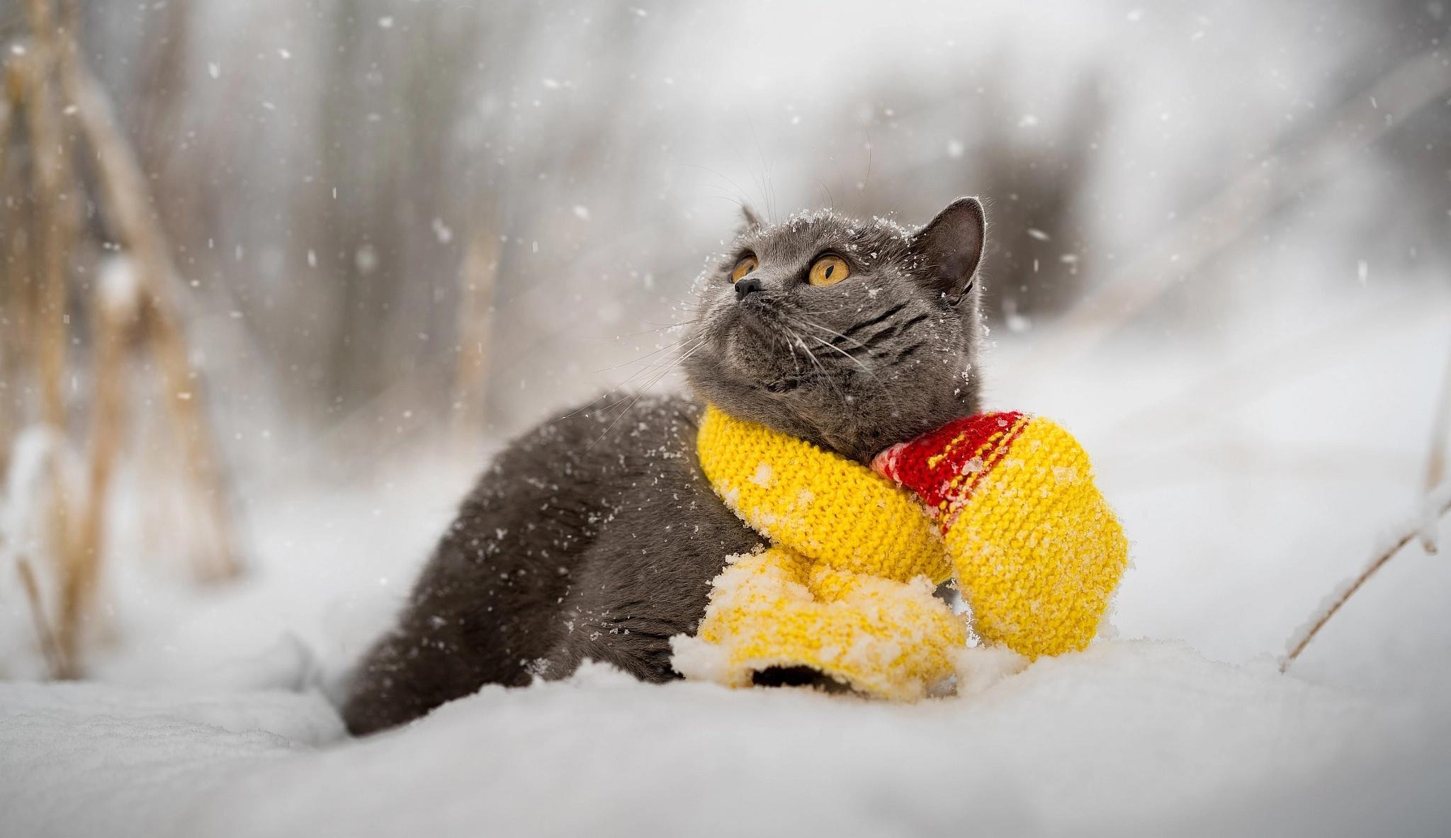 заметить, картинки коты в снегу на рабочий стол сорта винограда