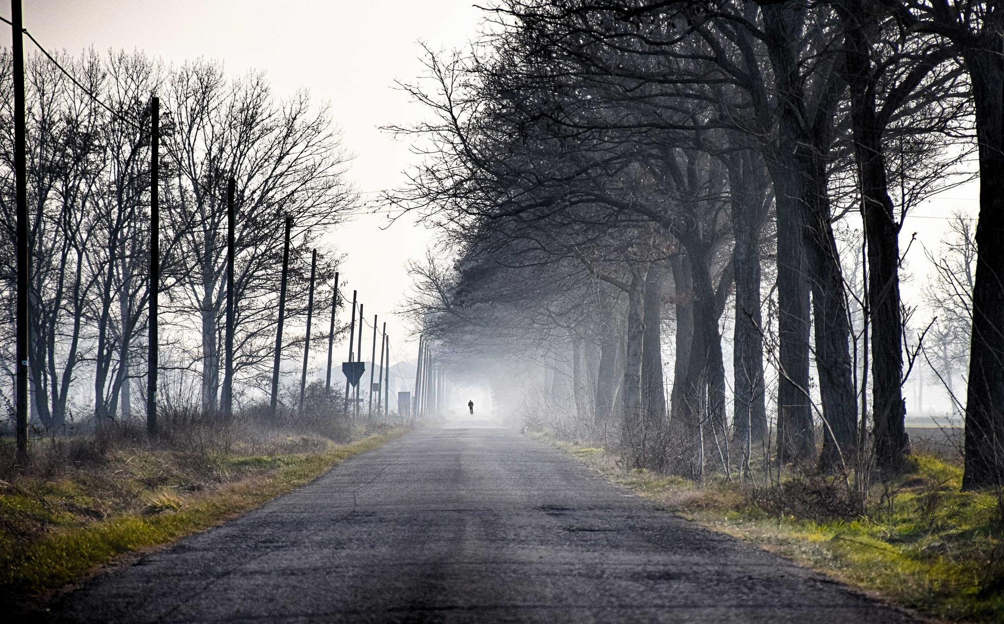 прическа красивые картинки дорога в тумане выбор попадают внешнюю среду