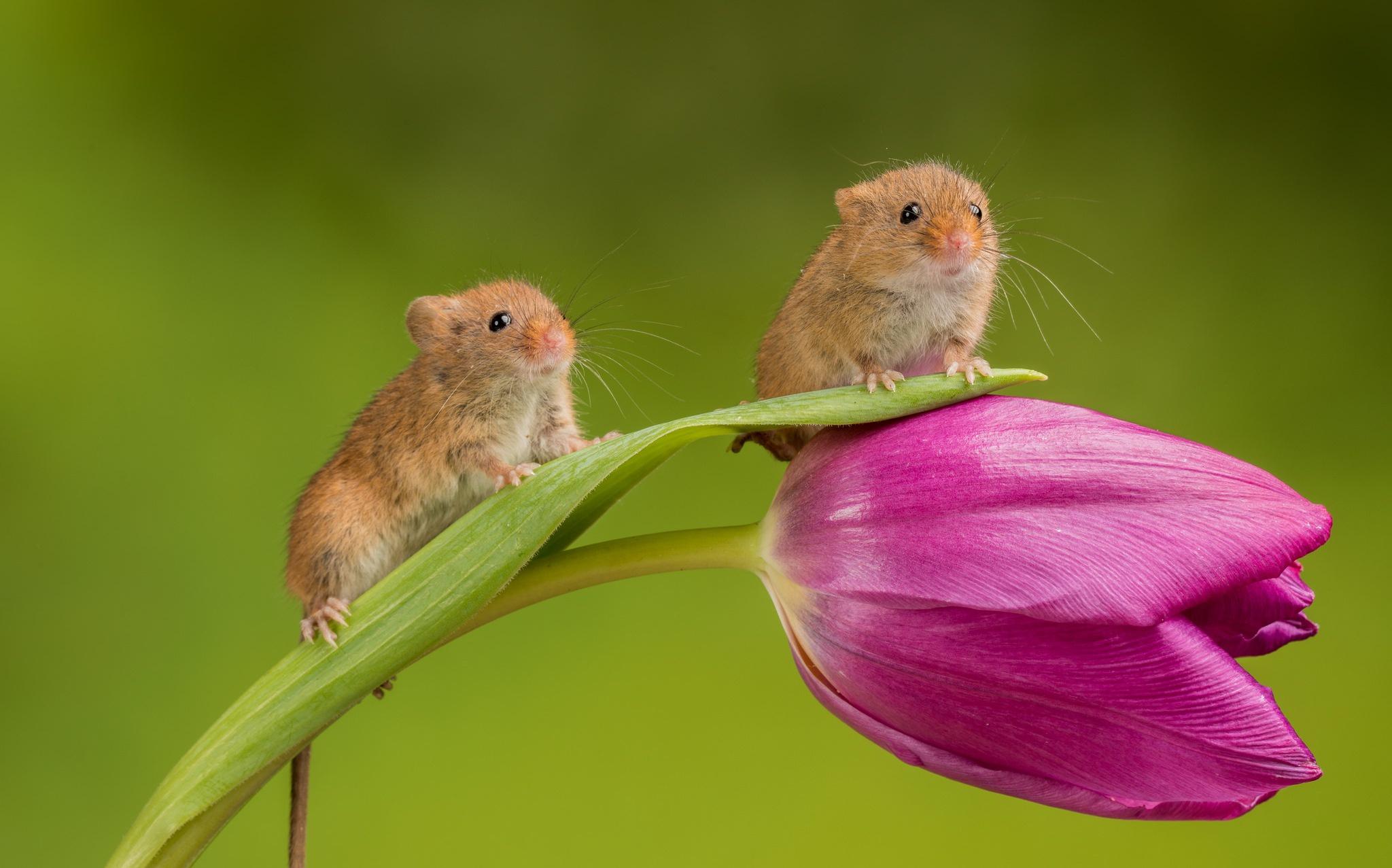 того, чтобы фото мышонка в цветке гудящими