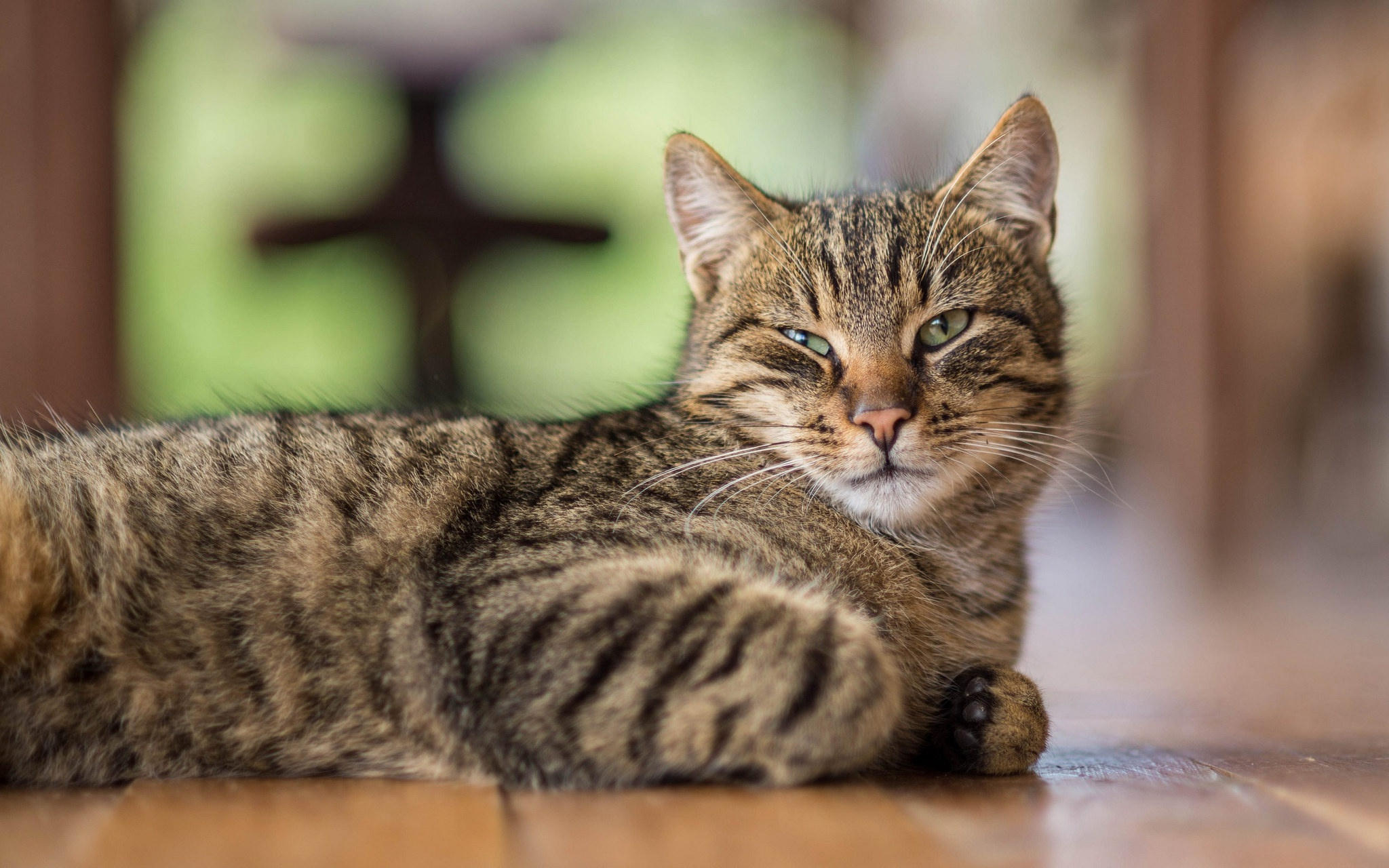 картинки лежащих кошек австрия