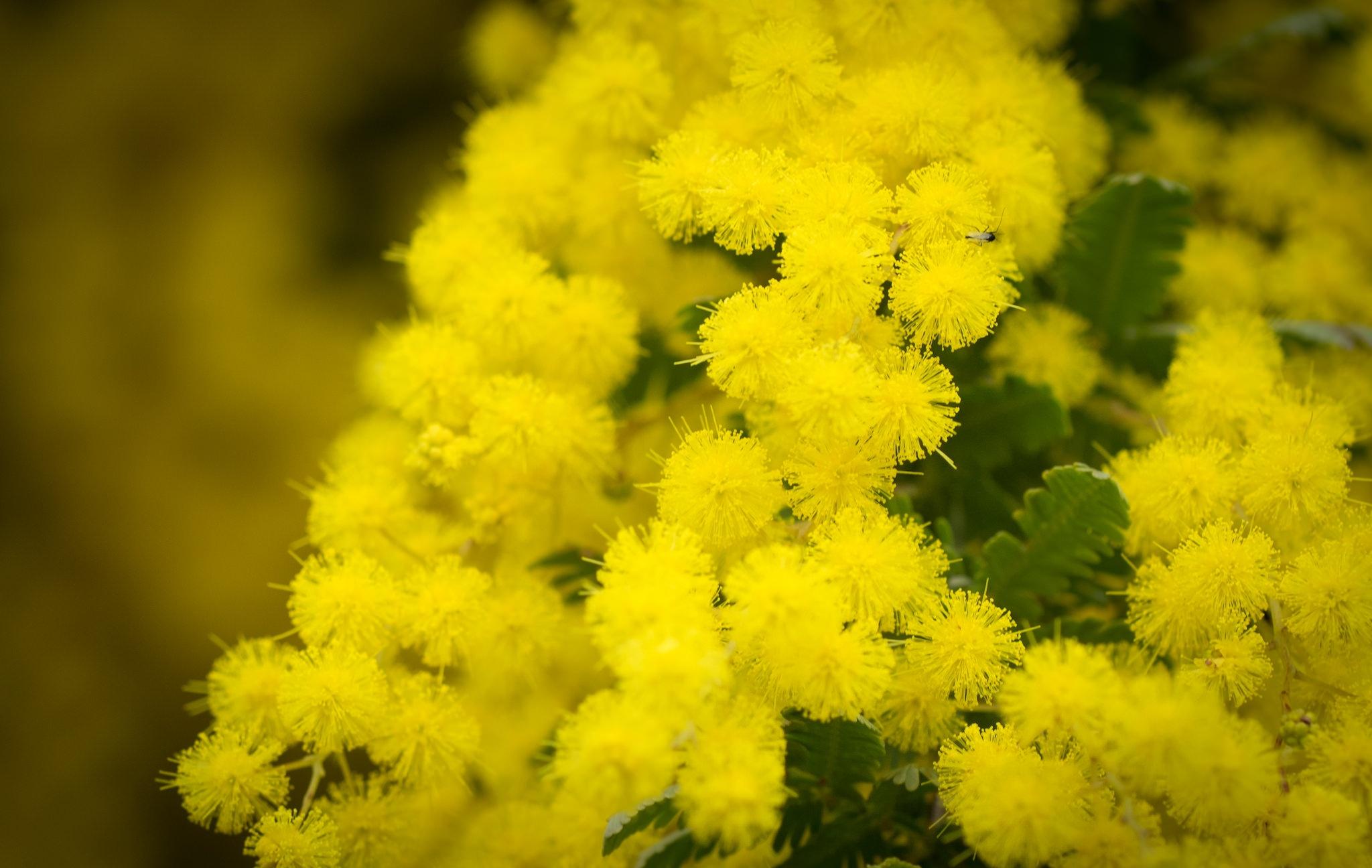 решил фото на рабочий стол желтые цветы покупать никакую