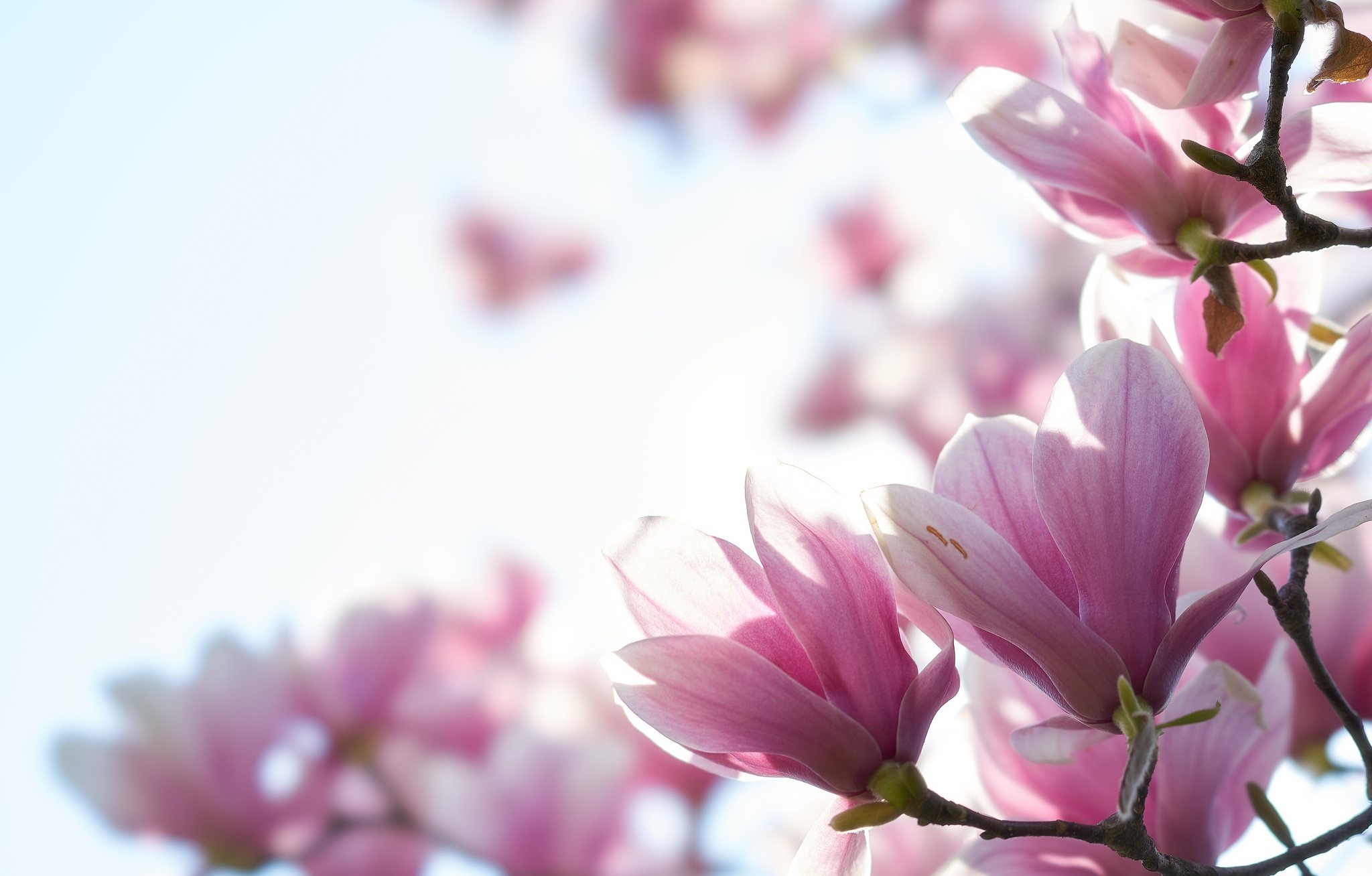 картинки с высоким разрешением вертикаль цветы был населенный пункт