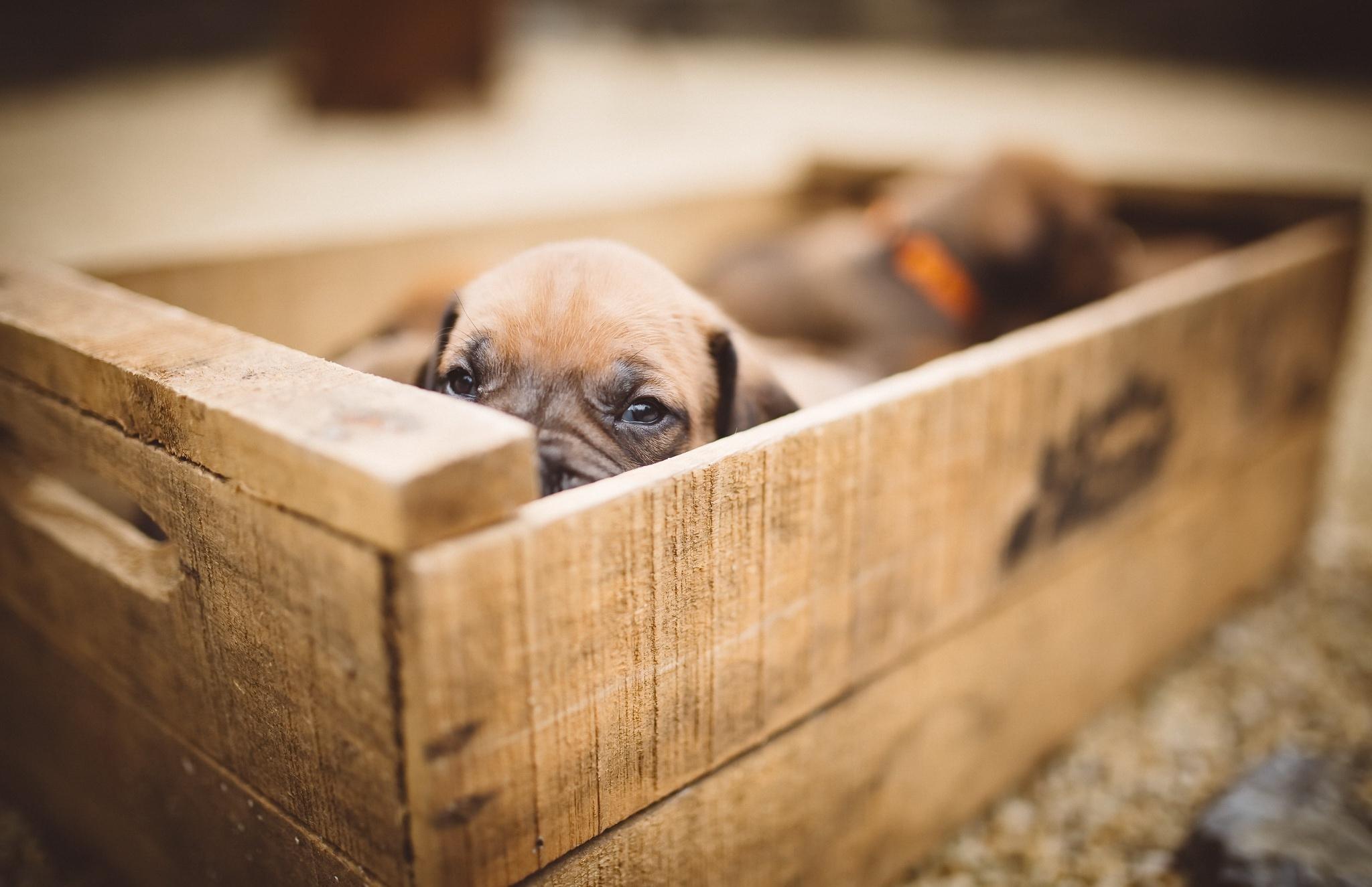 Картинка щенок в ящике