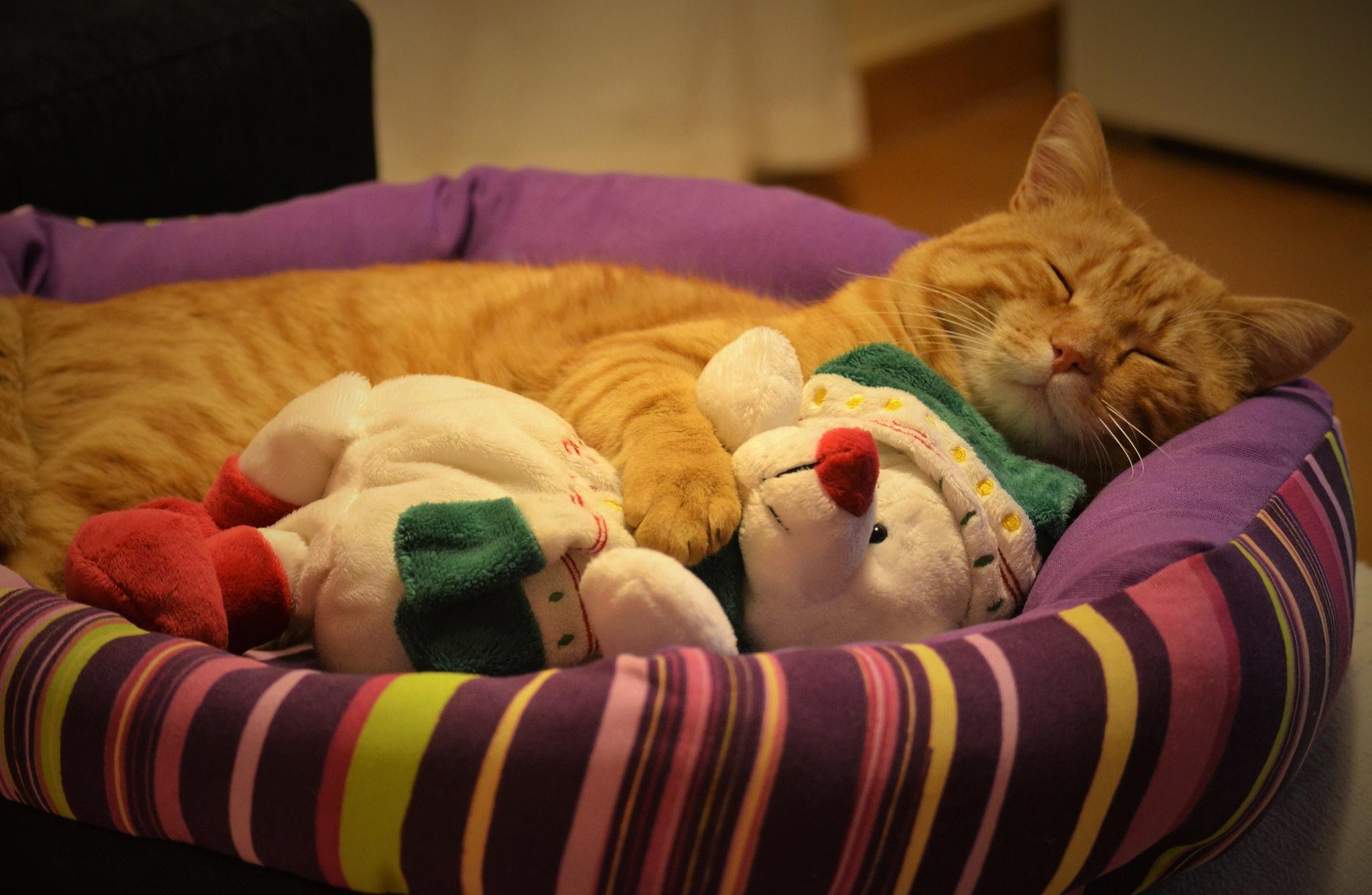 улицах вечернее картинка кошка уютно спит очень грязный, пасутся