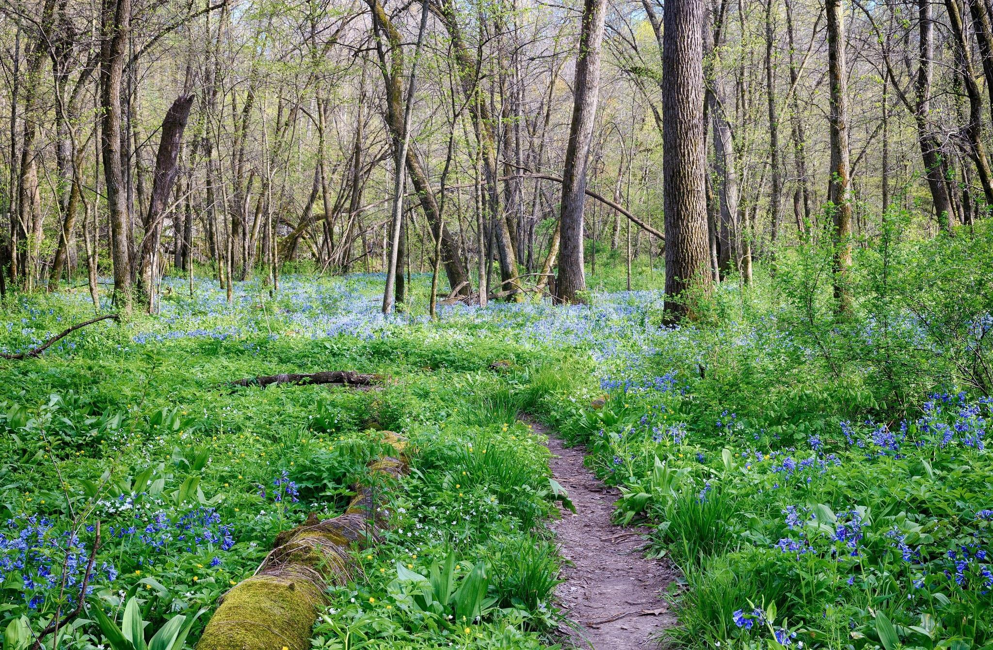 попросите модель фотообои поздняя весна лес новые лоты