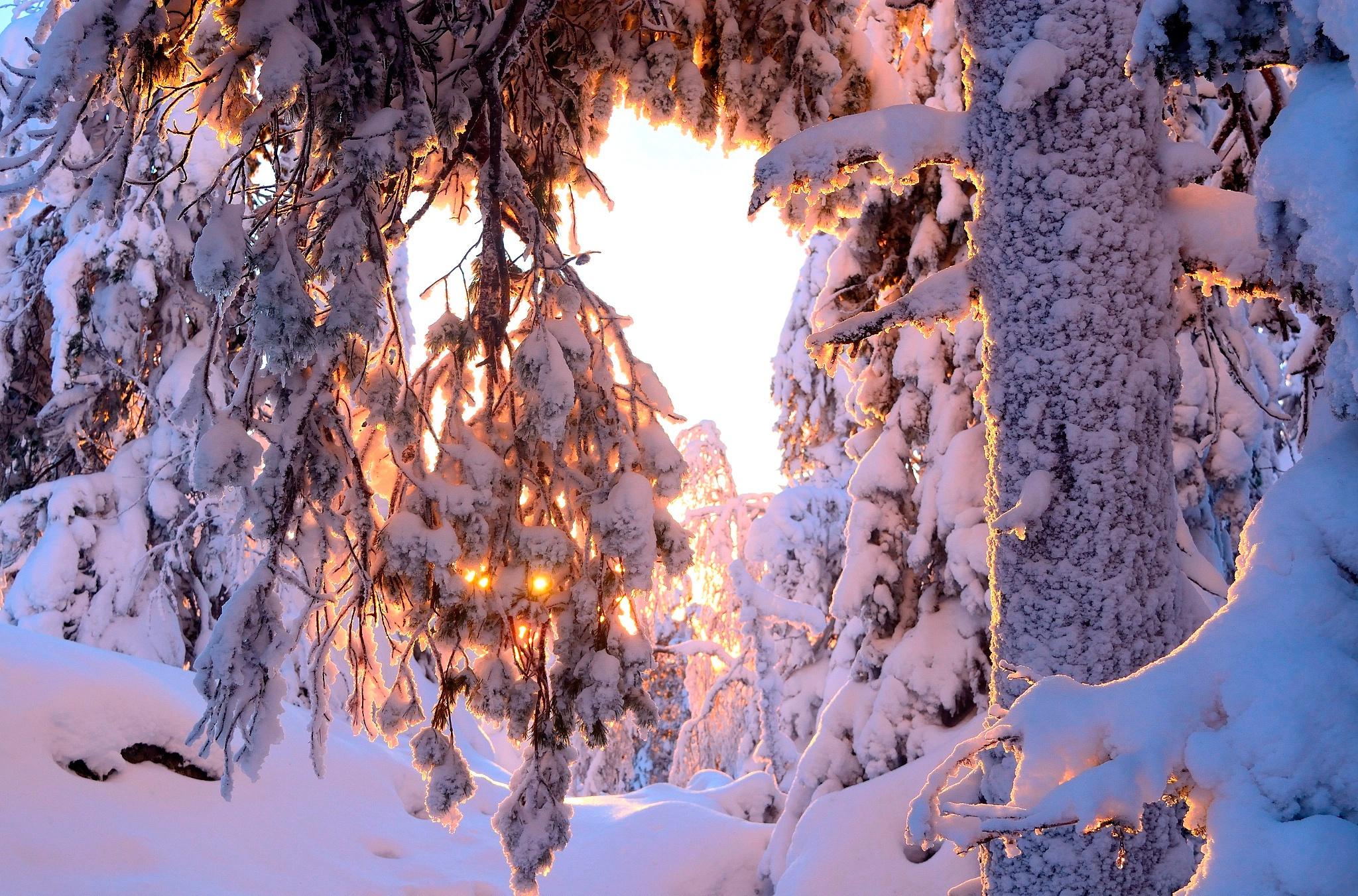 снег ветви лес snow branches forest  № 442789 без смс