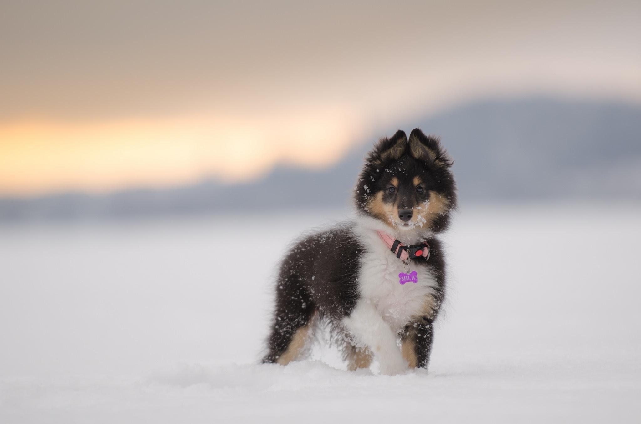 щенок снег puppy snow  № 2001806 без смс