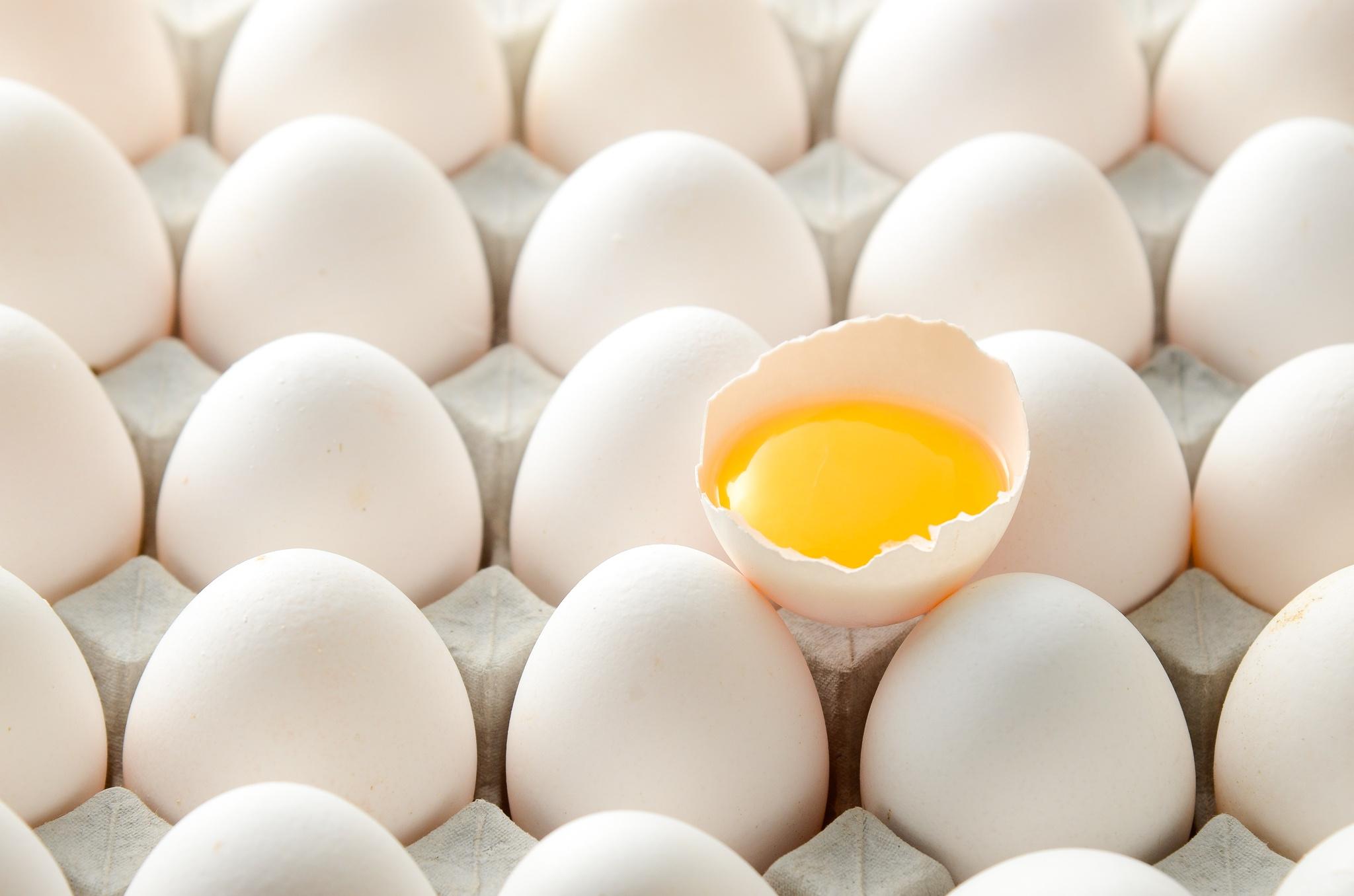 еда желток яйца food the yolk eggs  № 2999655 бесплатно