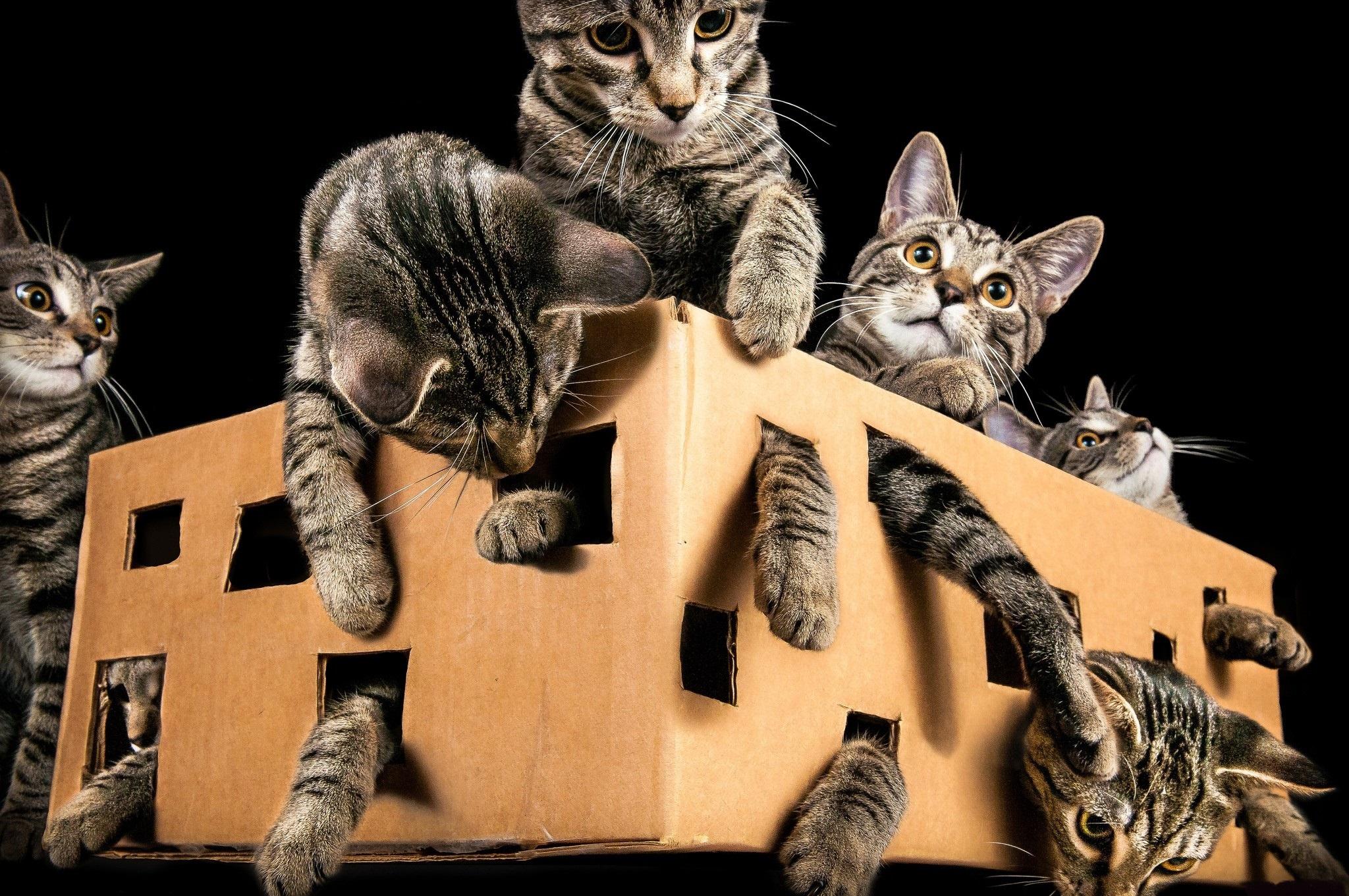 Картинки о людях и кошках прикольные чем сойти