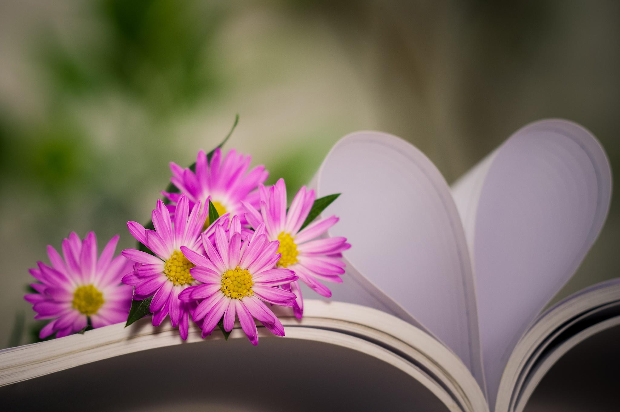 цветы тетрадь листы сердце  № 1351027 загрузить