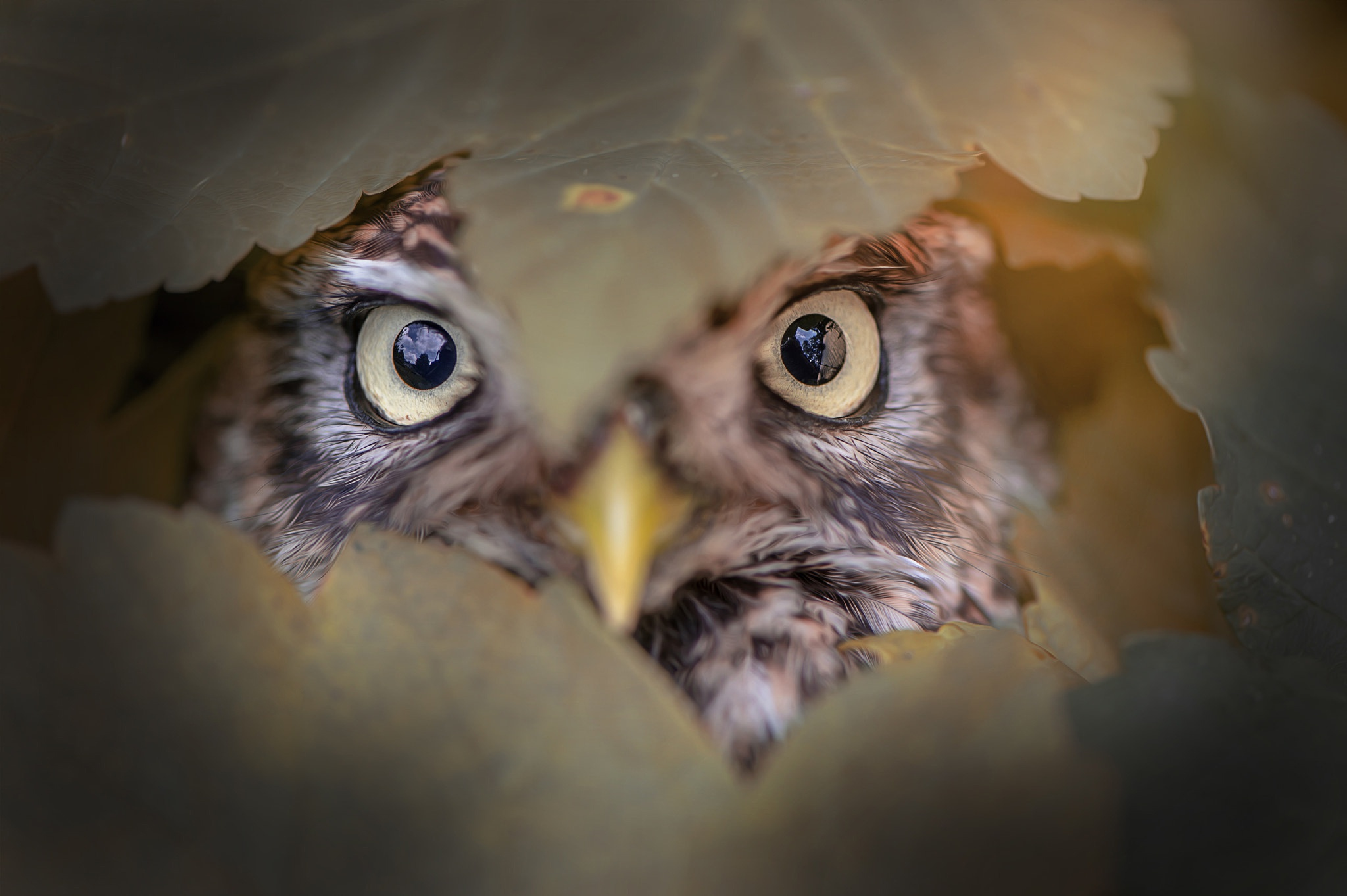 бытового взгляд на птиц глазами фотографа начала хотя про