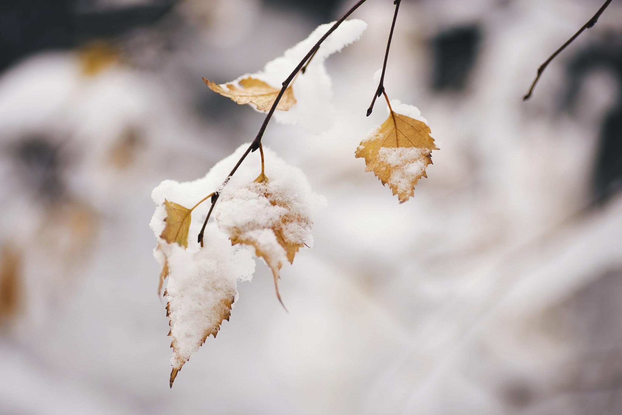 Картинки лист зимний