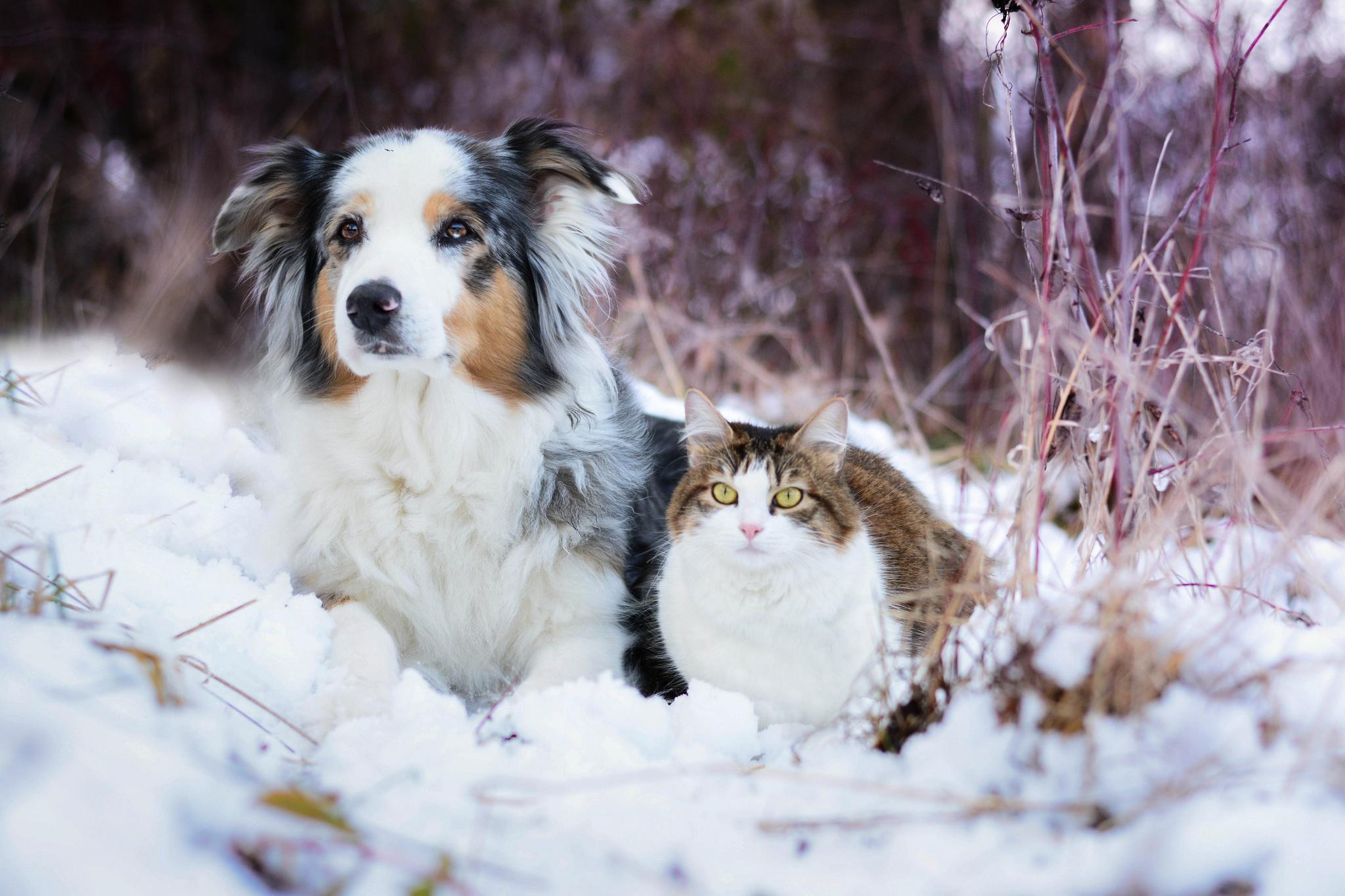 дорогие красивые картинки животных в снегу кто-то