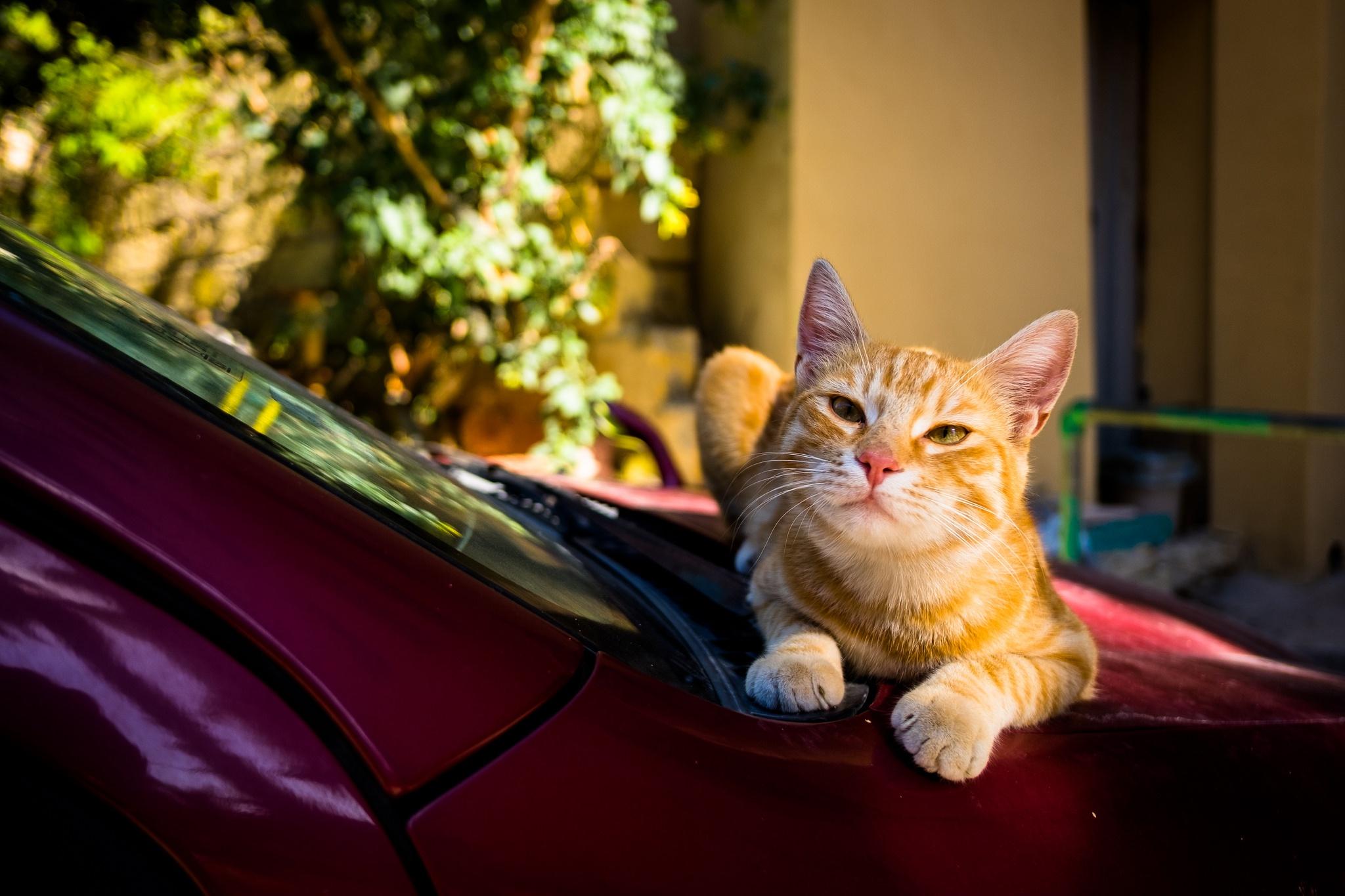 Авто в картинках кошки