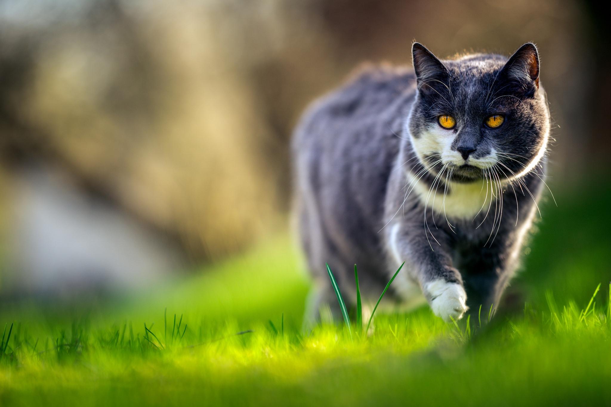 природа животные трава кот  № 1316852  скачать