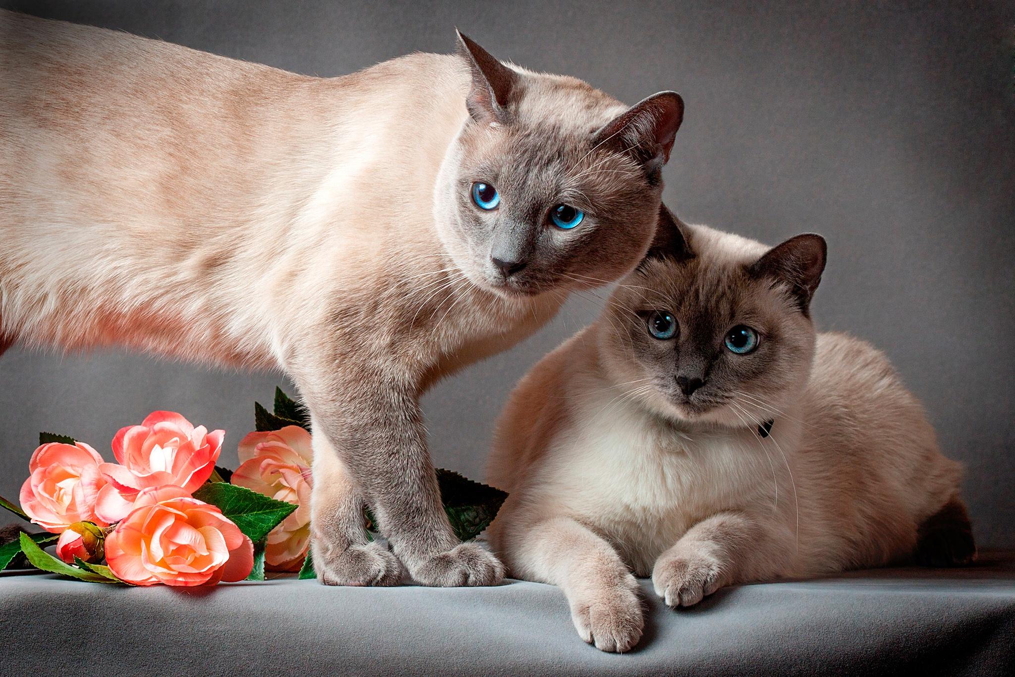некоторых куда загрузить фото кошек пережил, когда