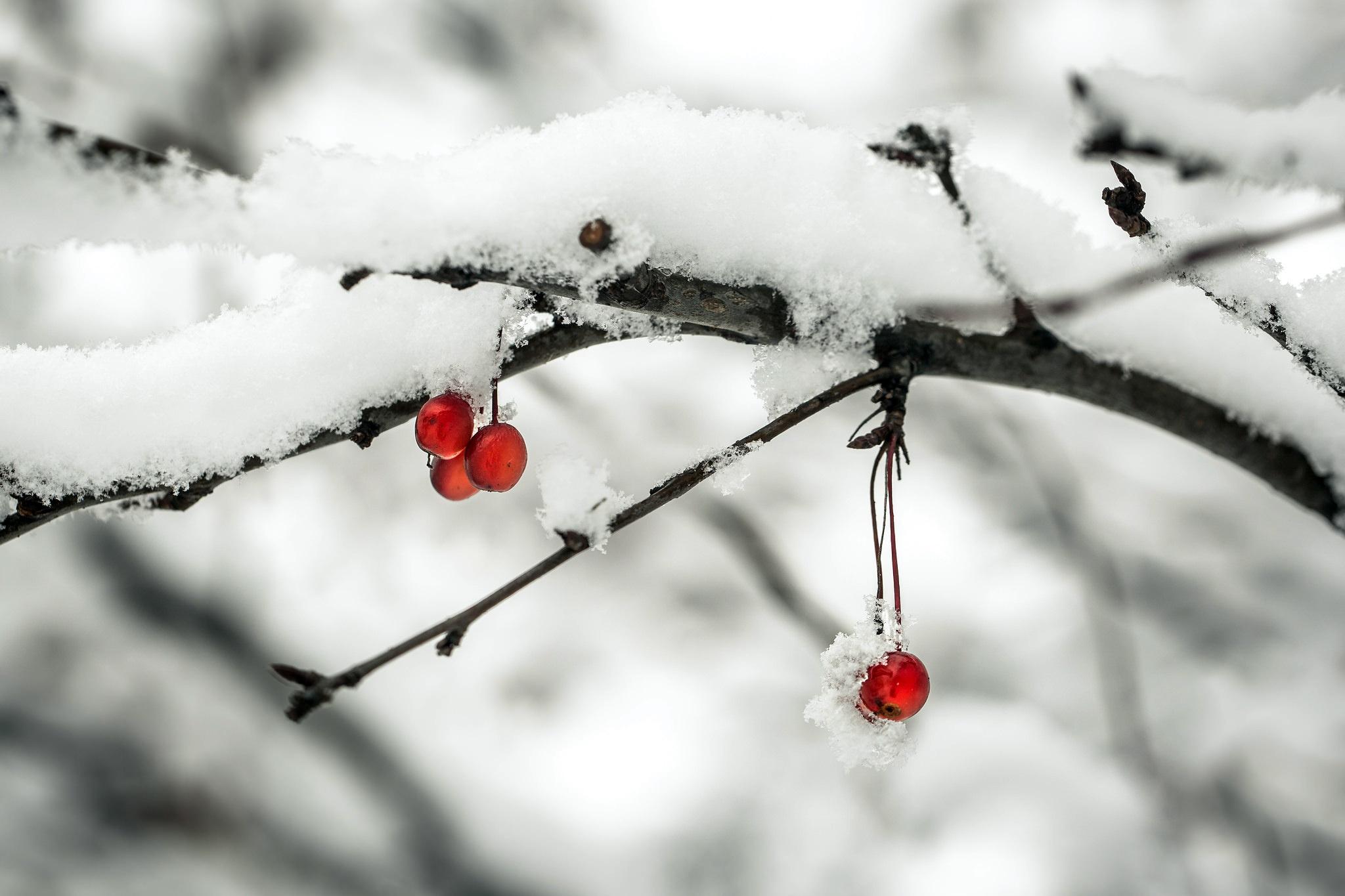 природа ветка снег  № 3089987 без смс