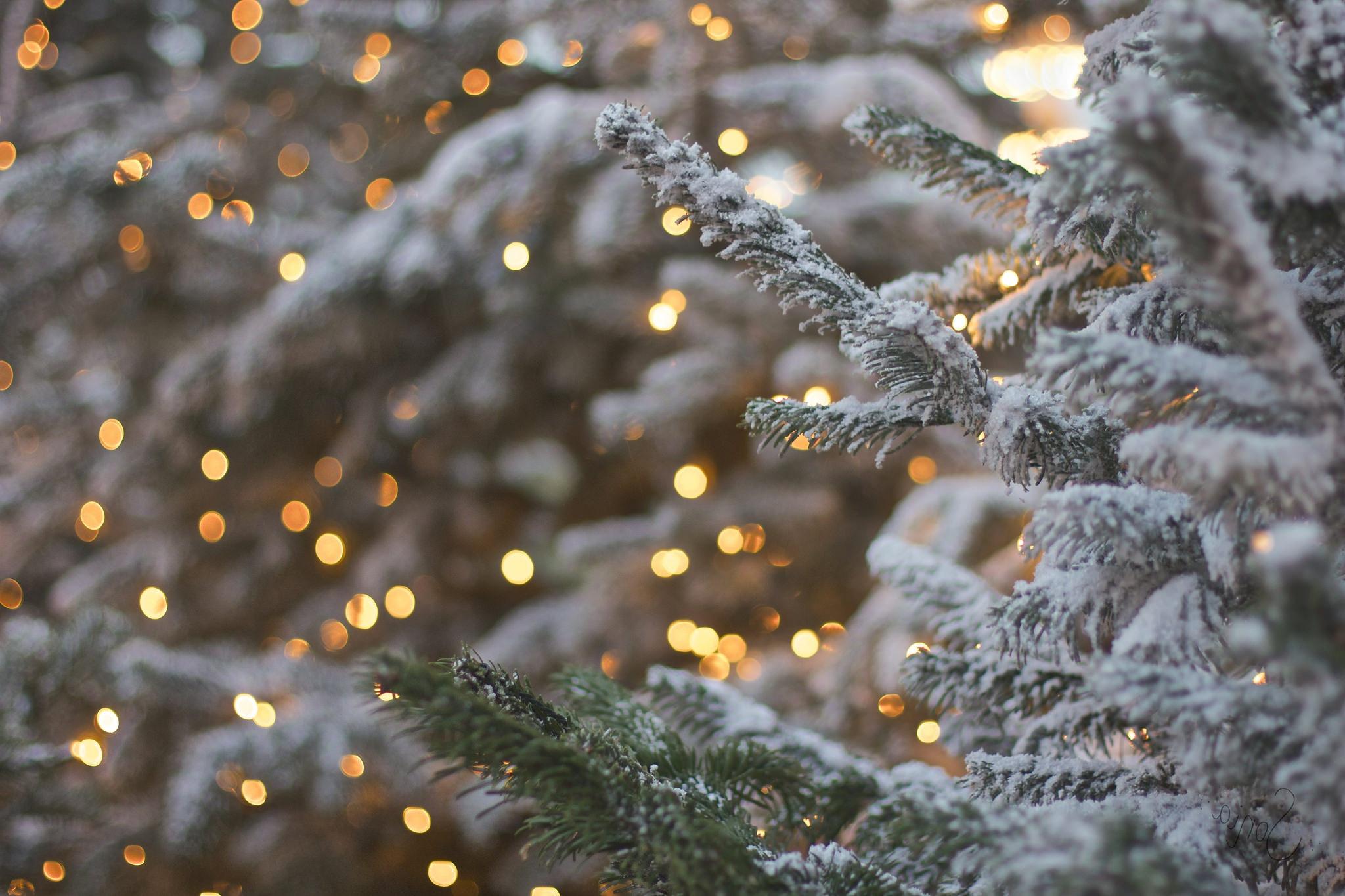 Картинки снег на елке