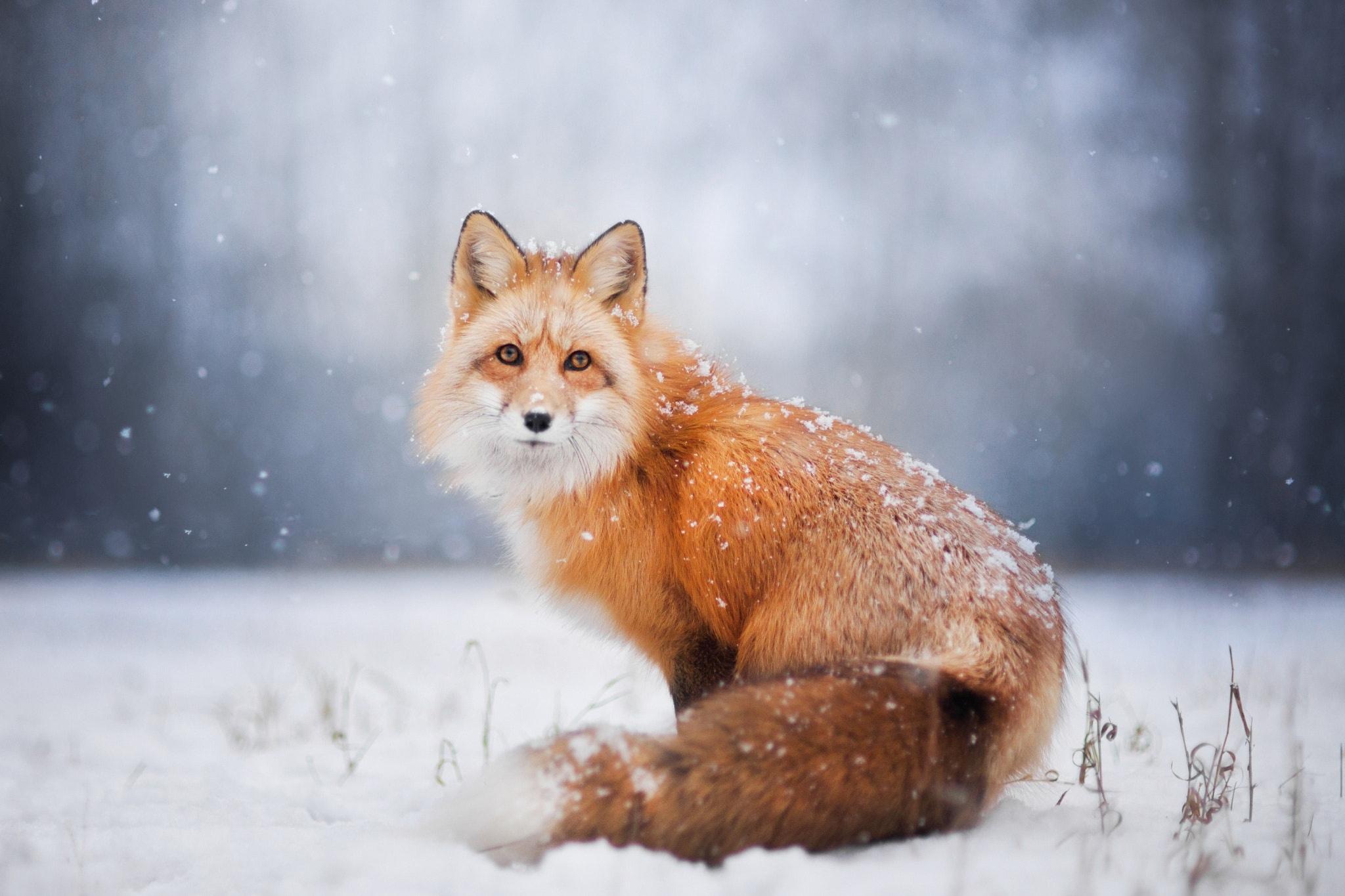 красивые фото животных в снегу потолки
