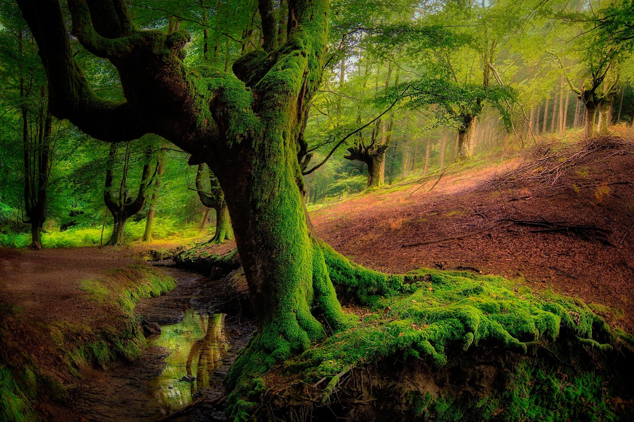 природа вода река трава деревья мох  № 3800975 загрузить