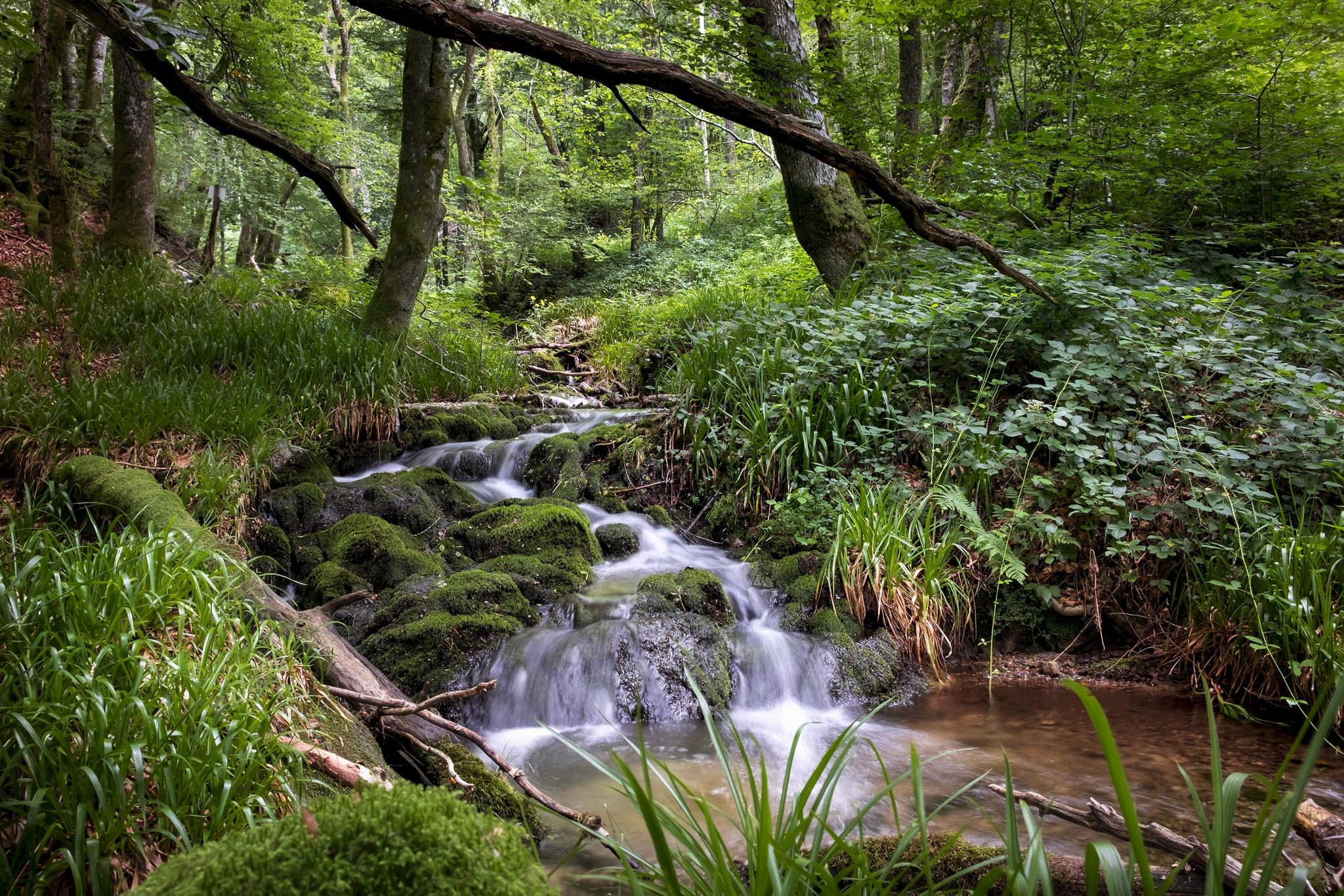 фото ручей в лесу терпится