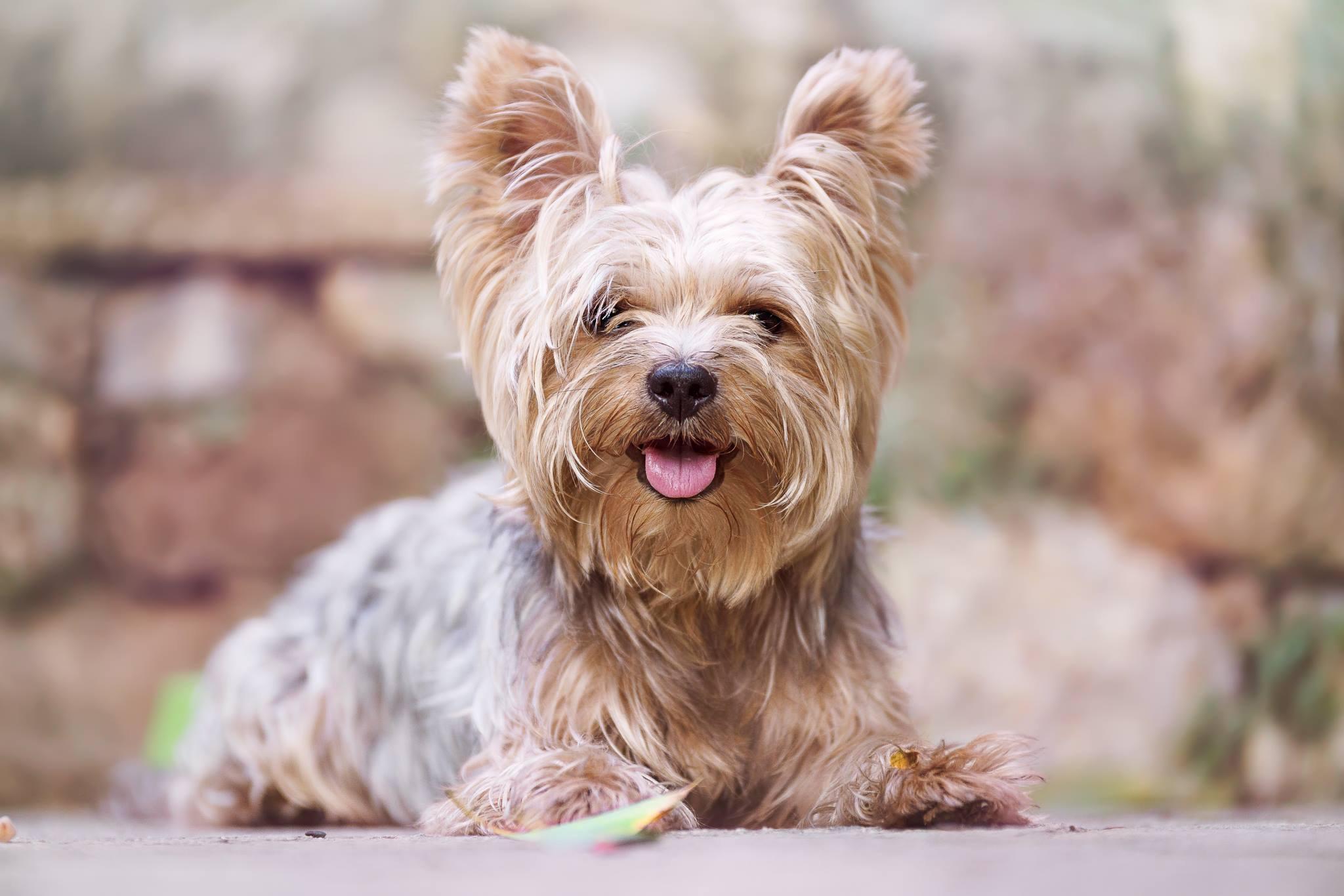 Собака печальная фото несвобода