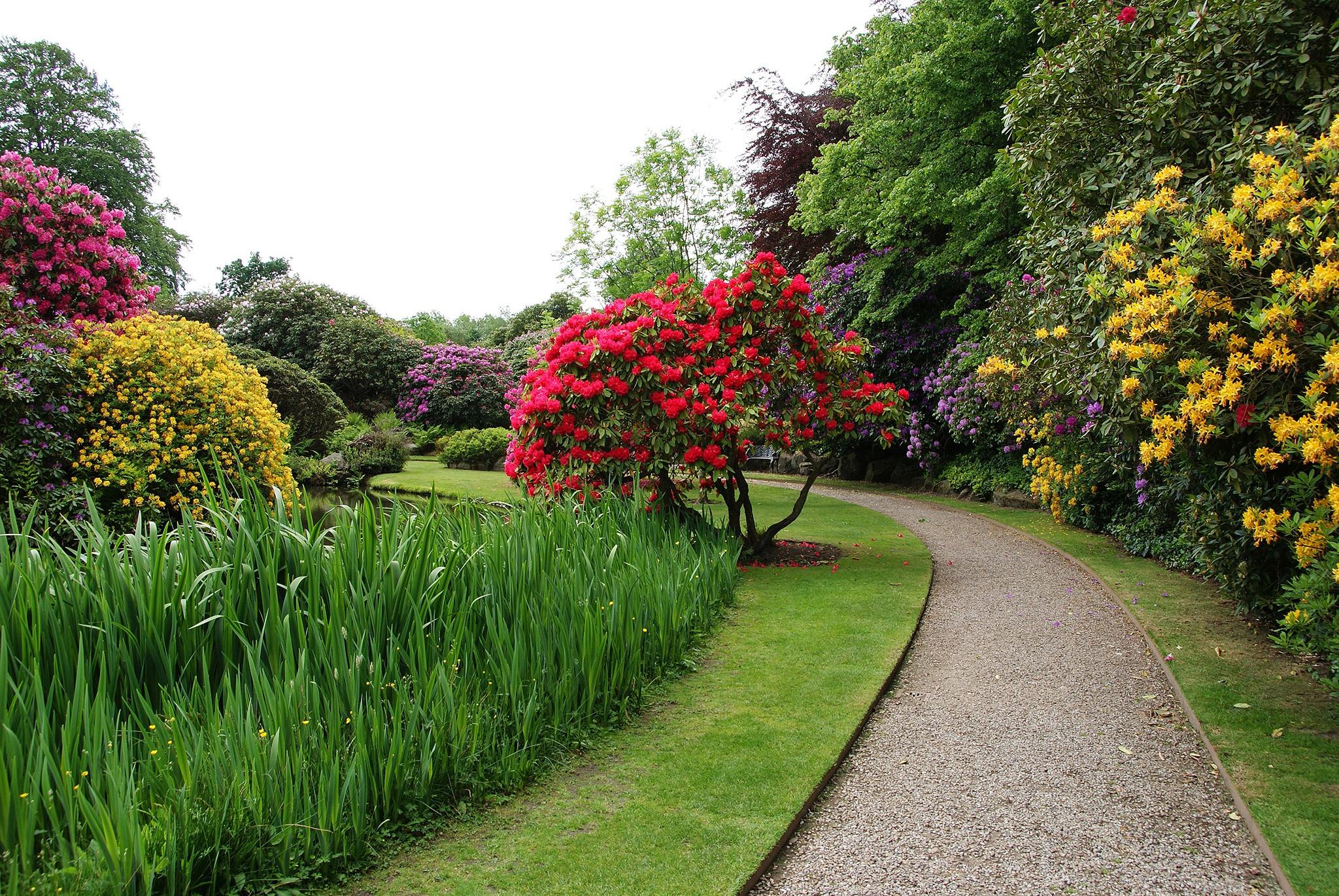 британские цветущие сады фото уильям