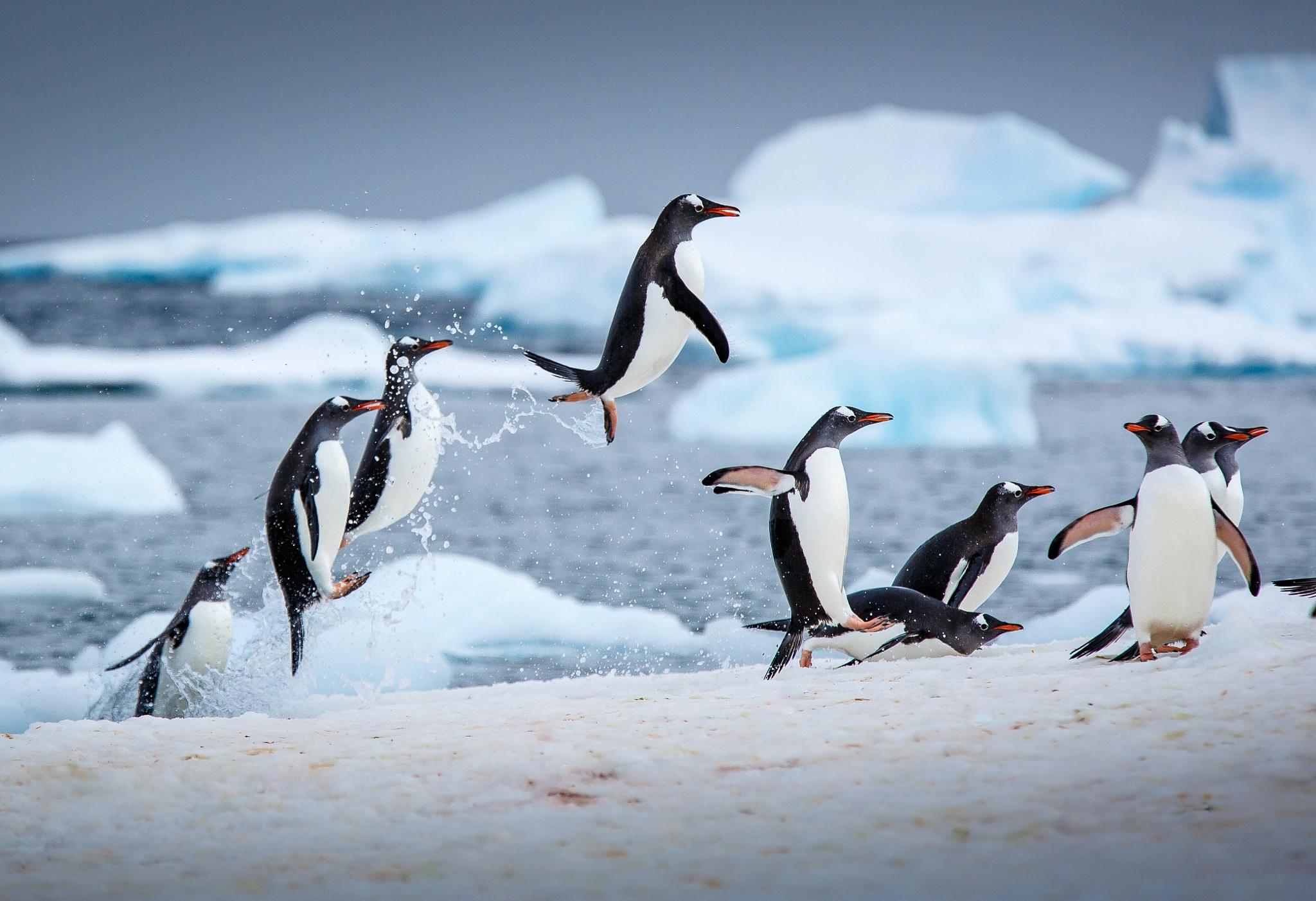 Пингвин в воде  № 96464  скачать