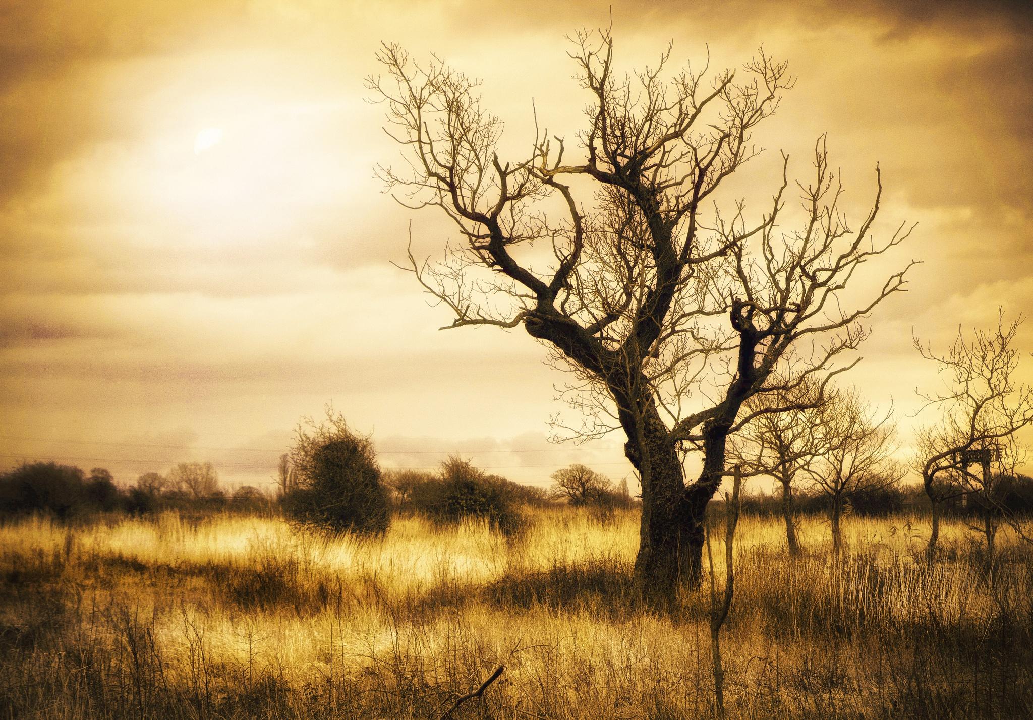 блондинка дерево поле blonde tree field  № 1377133 бесплатно