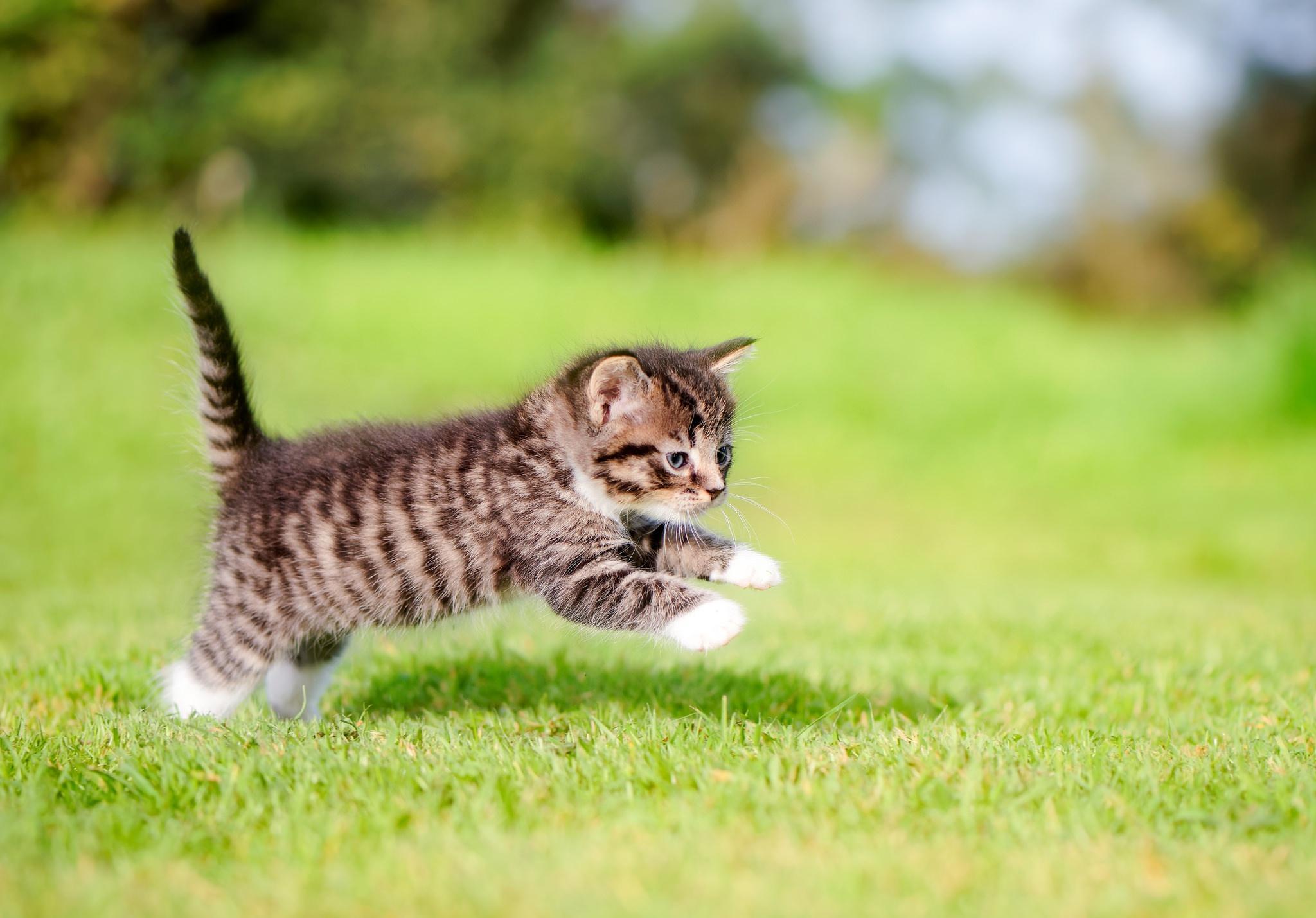 Котенок на траве  № 2959583 без смс