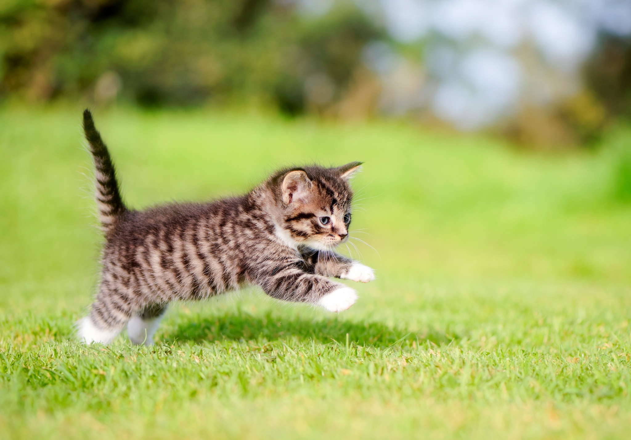 Котенок играющий с кошкой в траве  № 1994878 без смс