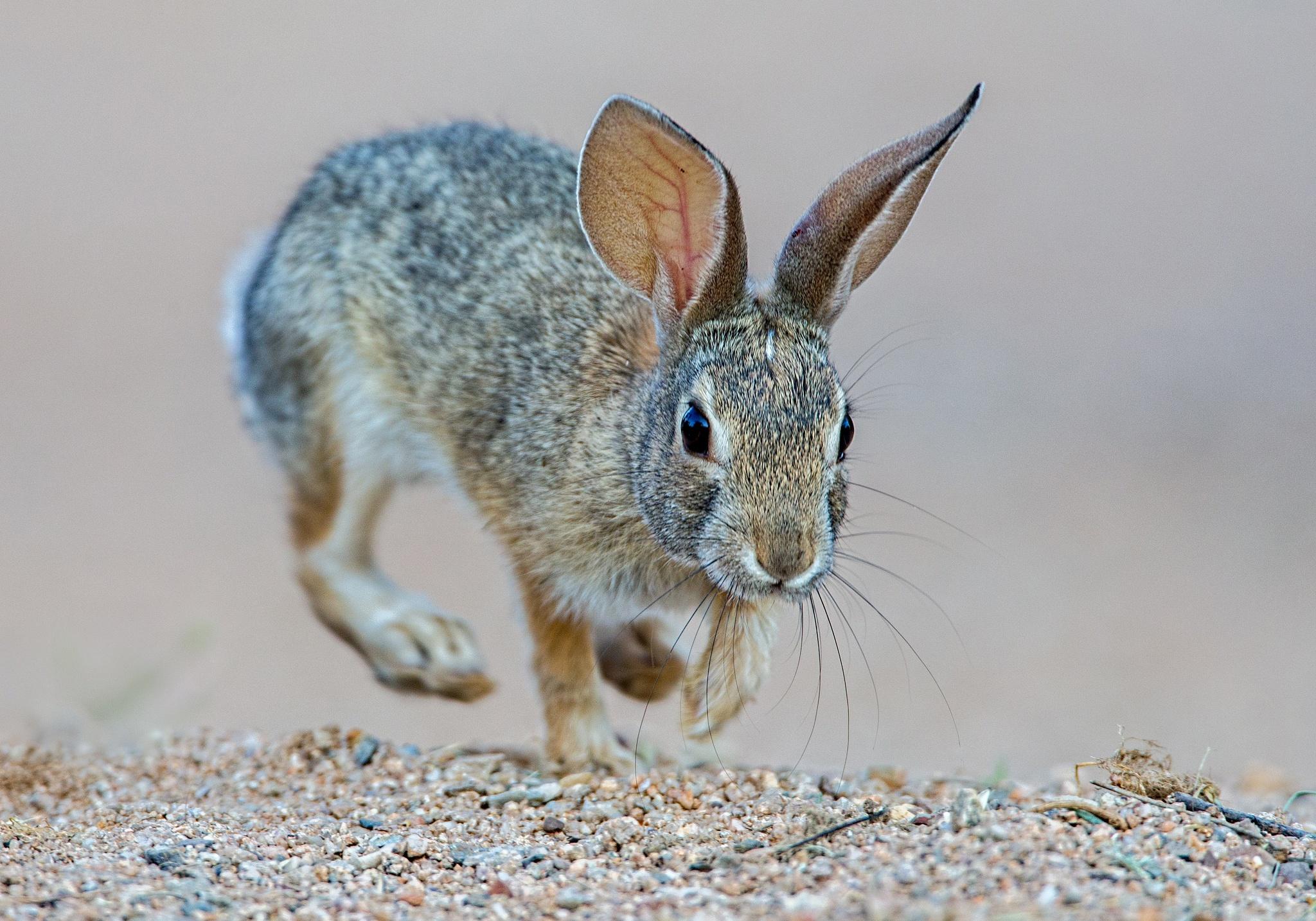 неблагоприятно картинки про уши зайцев которых изображены сочные