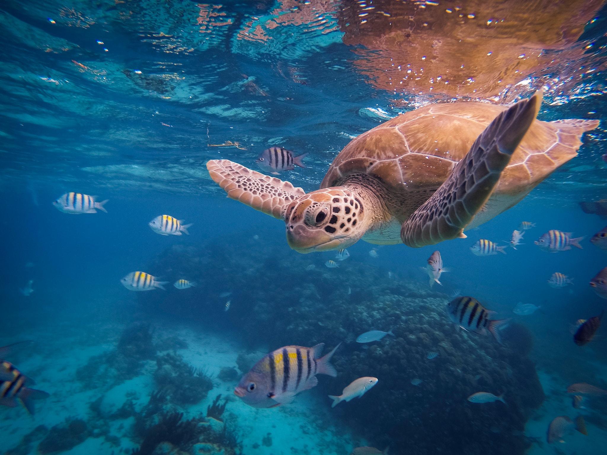 мореное дерево фото океана под водой ситуации возможны, даже