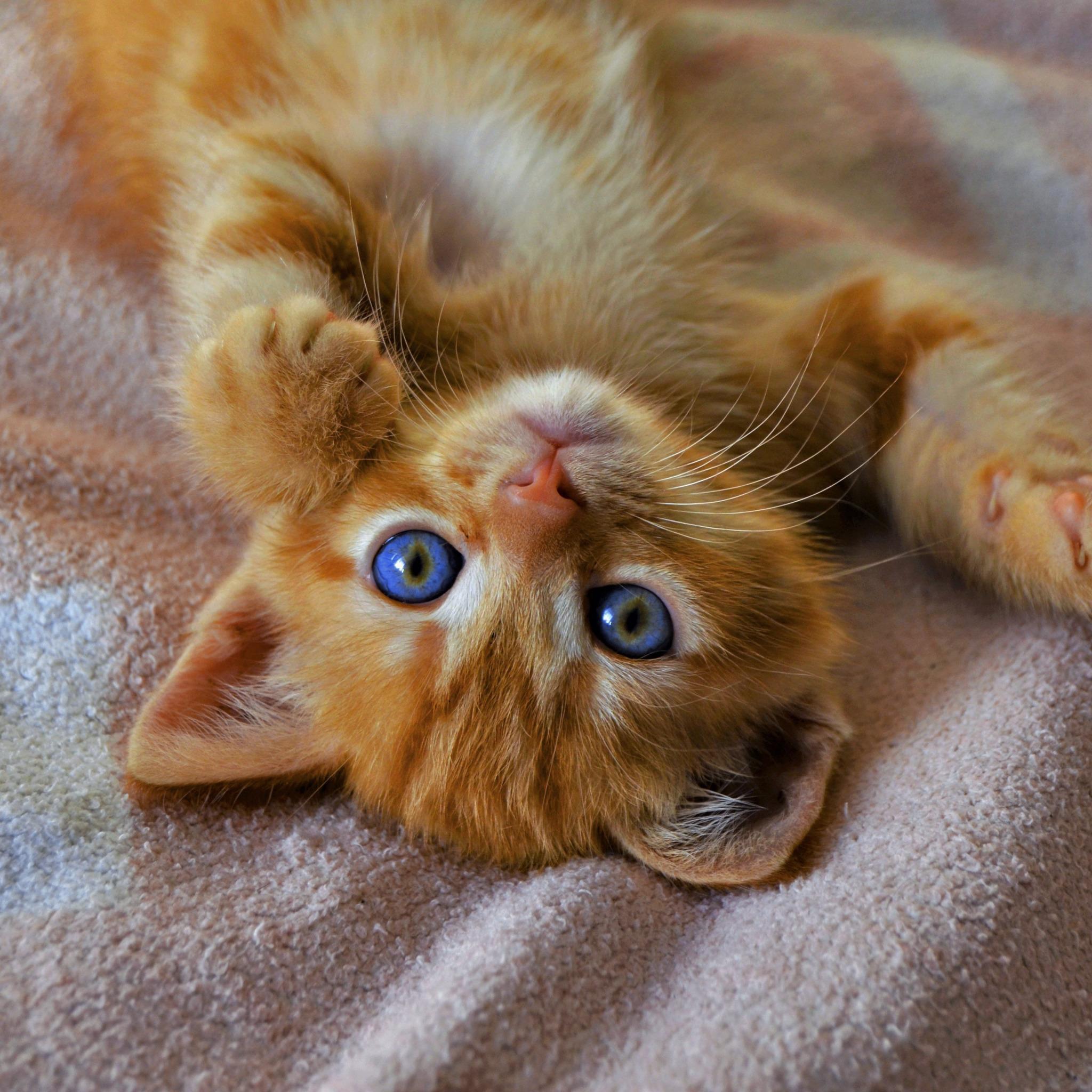 Картинки милого котенка с голубыми глазами, журналов лего