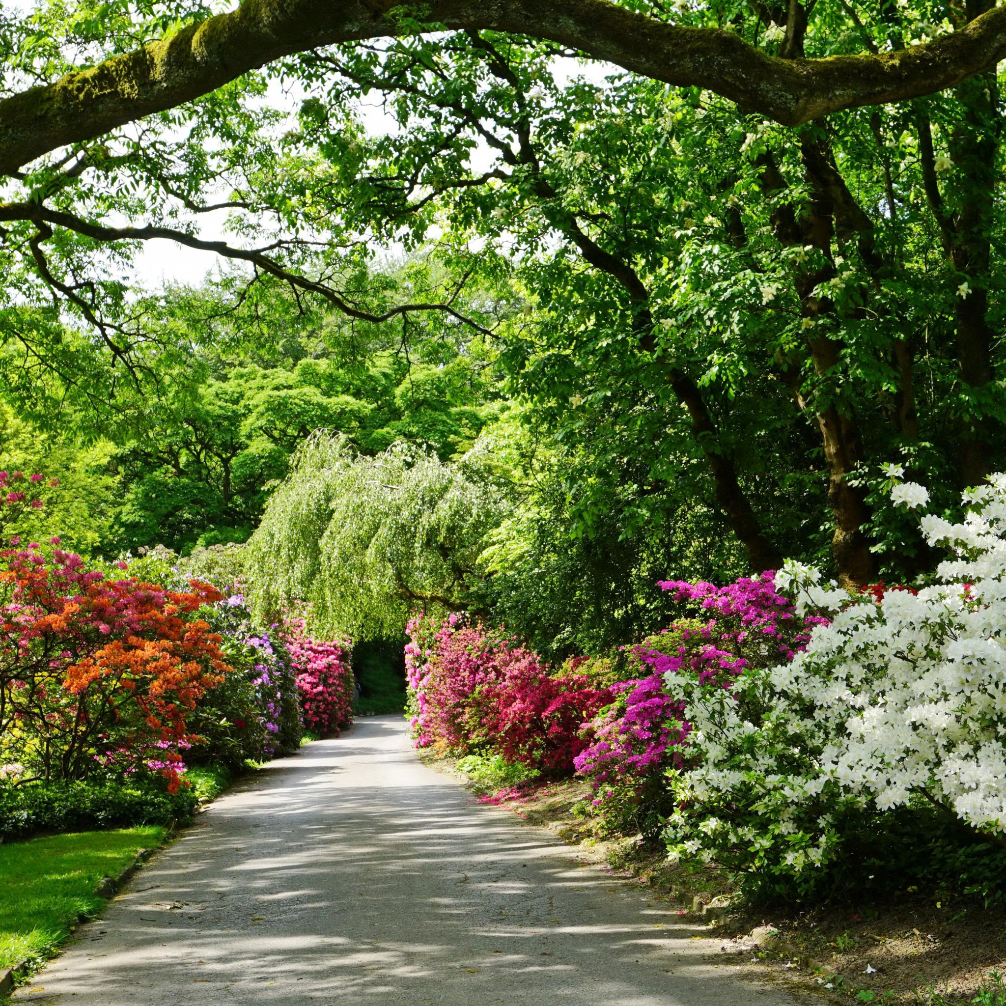 дому задумали картинки фото деревья кустарники захочет