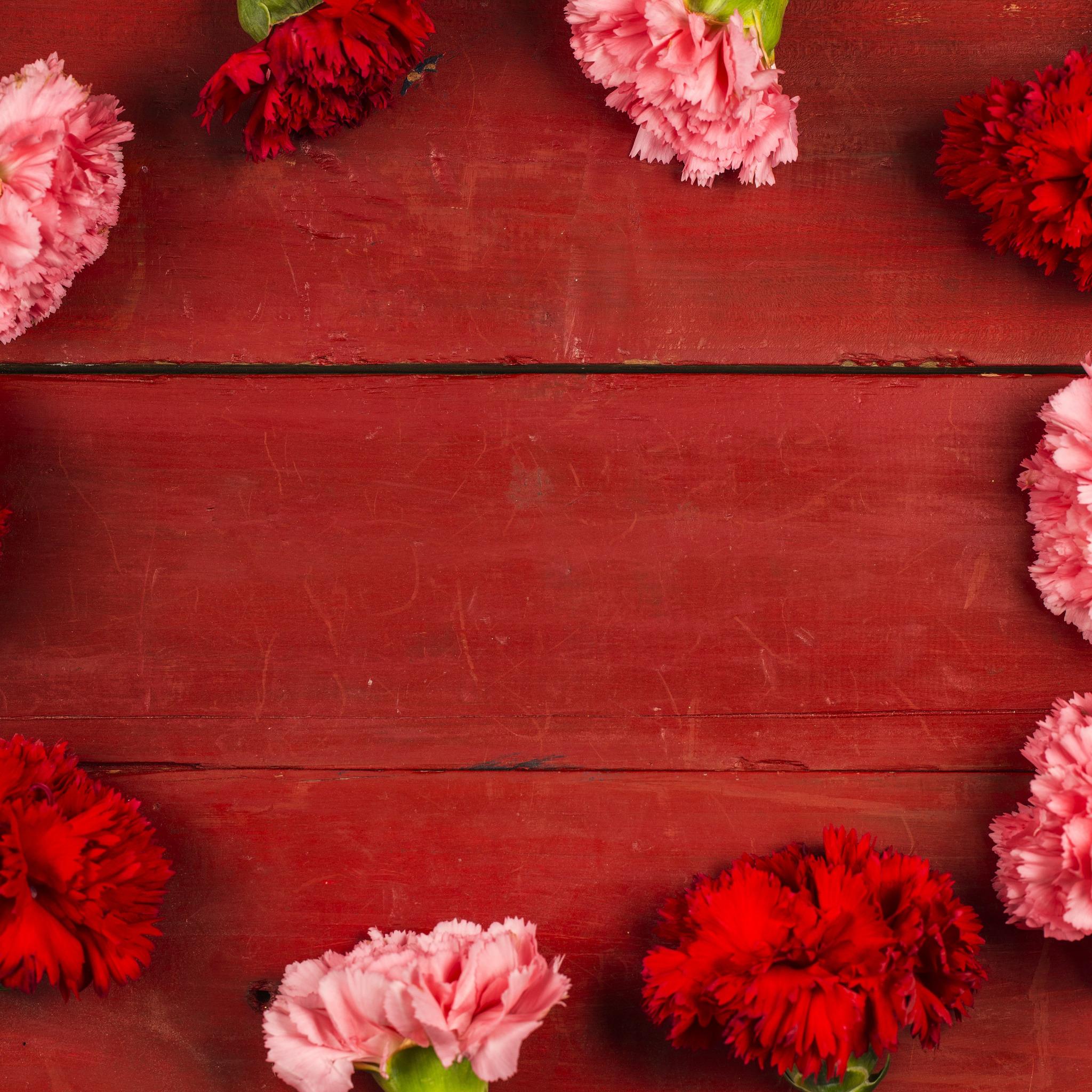 картинки гвоздики цветы для фона открытки товаров категории