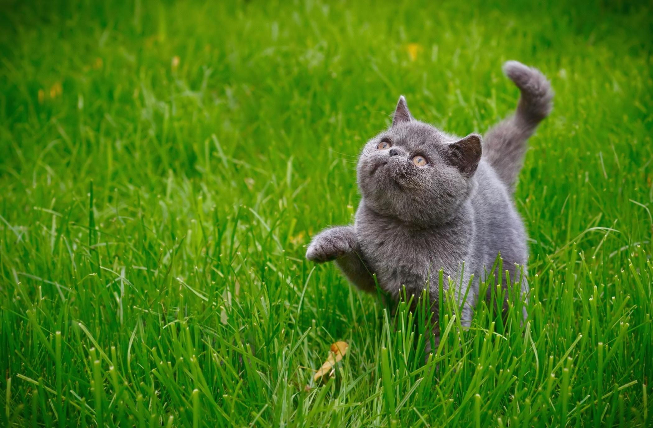 Котенок на траве  № 2959631 без смс